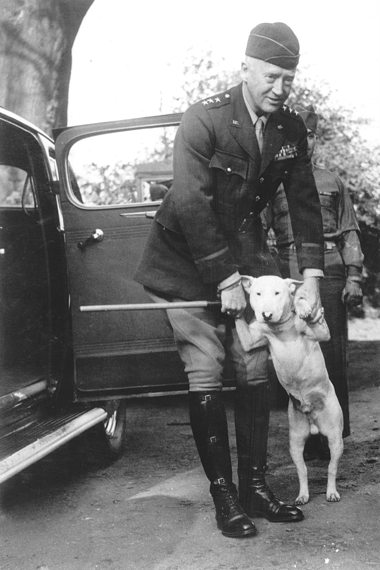 bull terrier with general patton