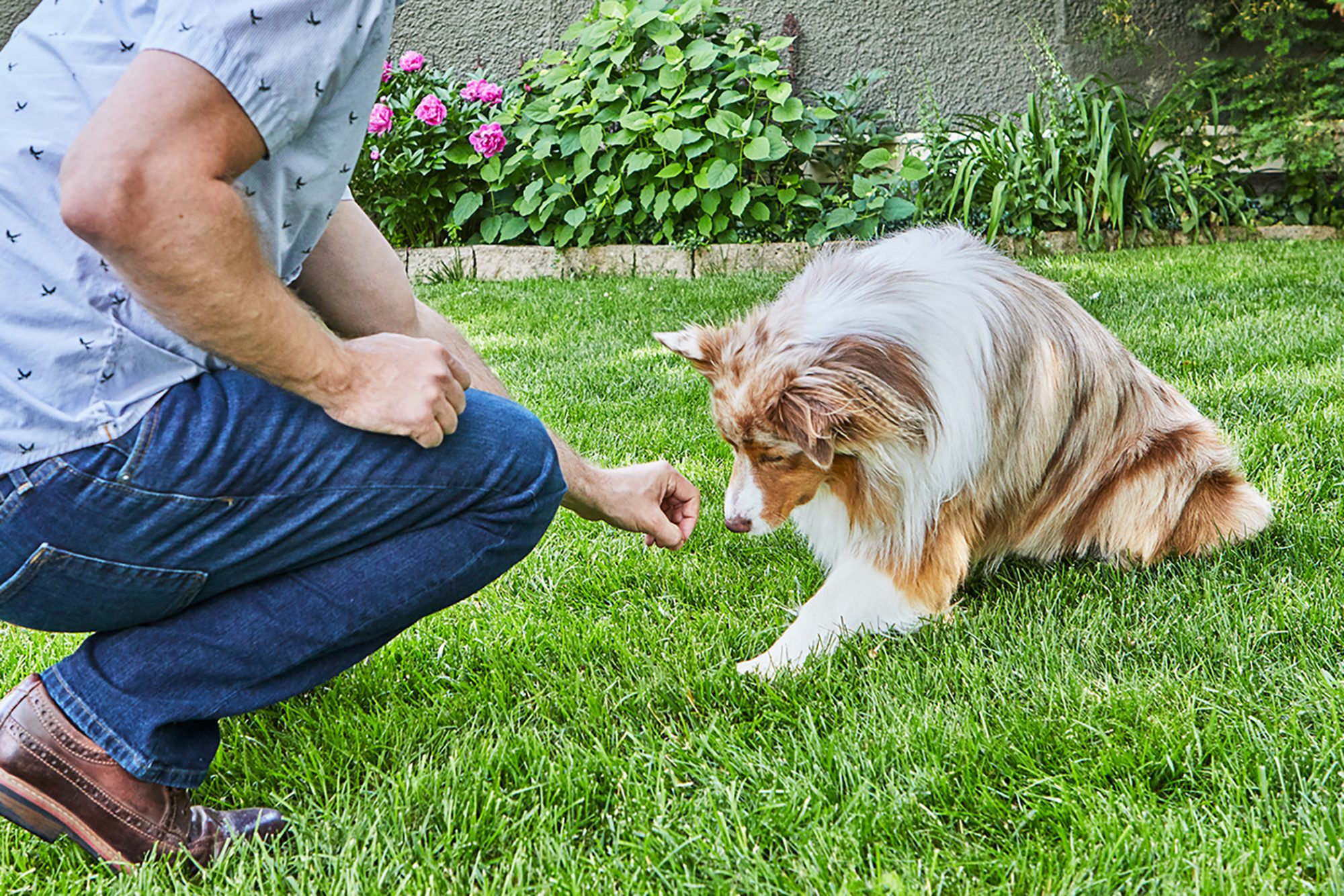 trainer luring dog to down position with a treat