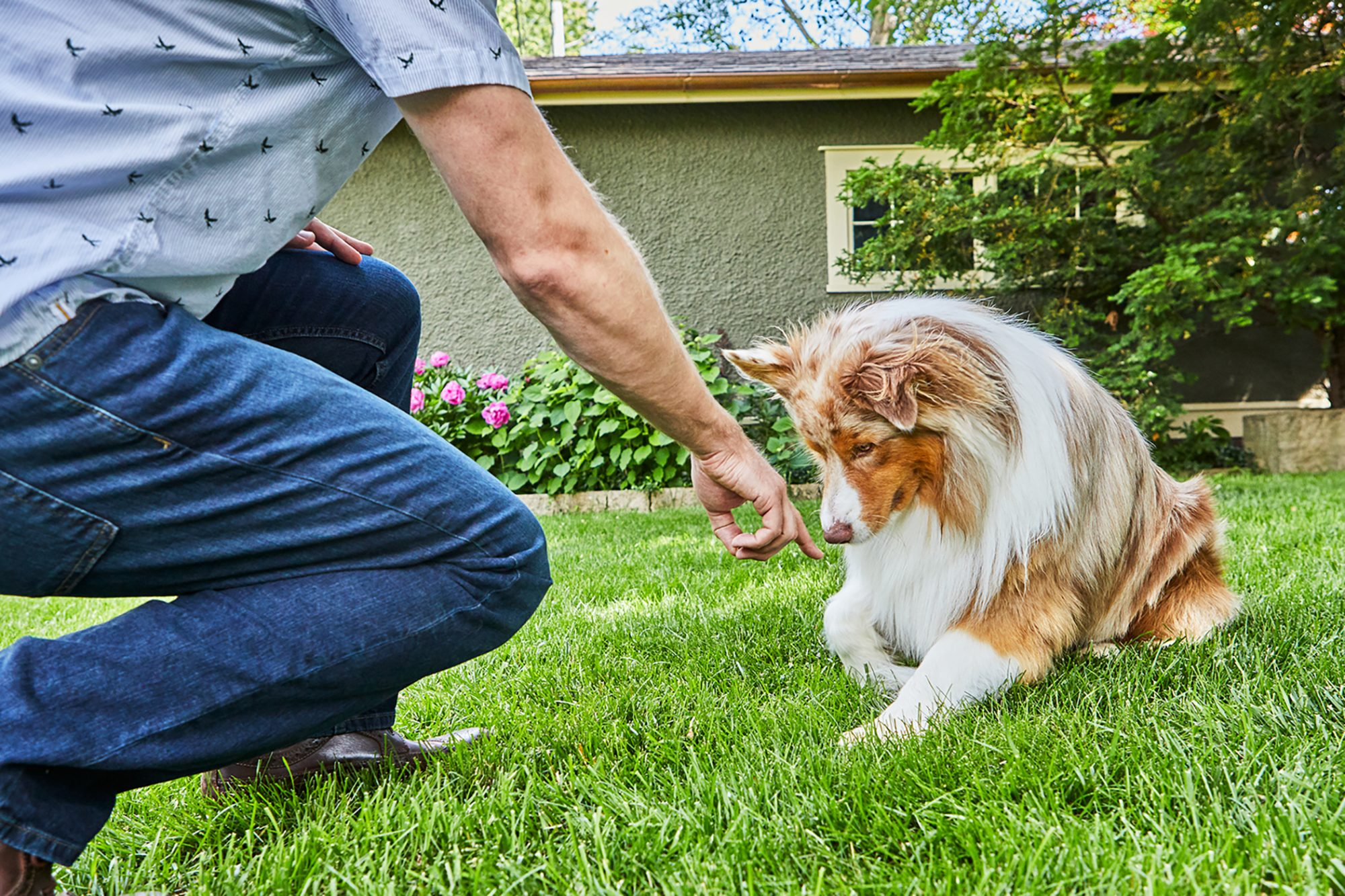 trainer using hand signal for dog to lie down