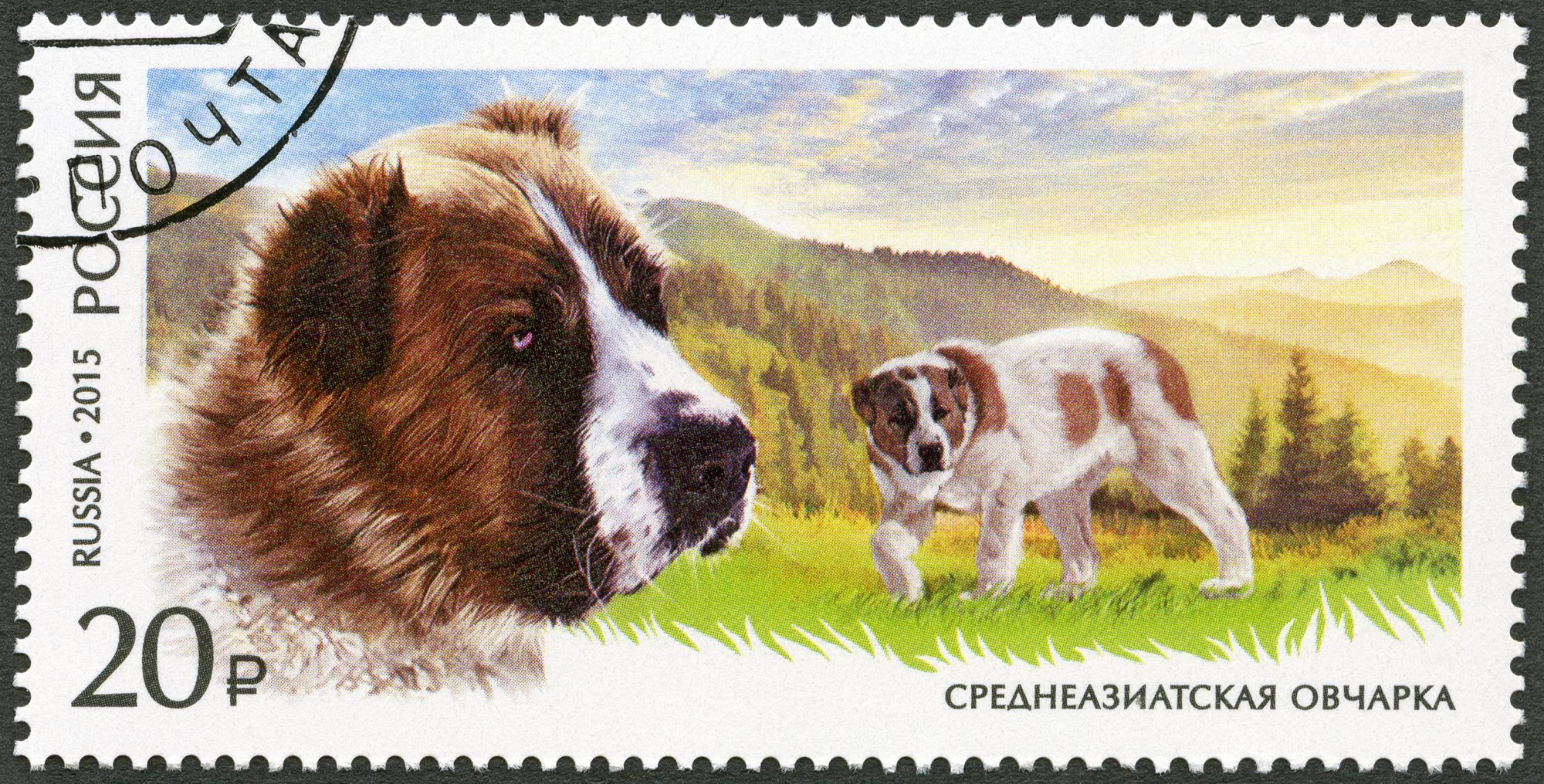 central asian shepherd russian stamp