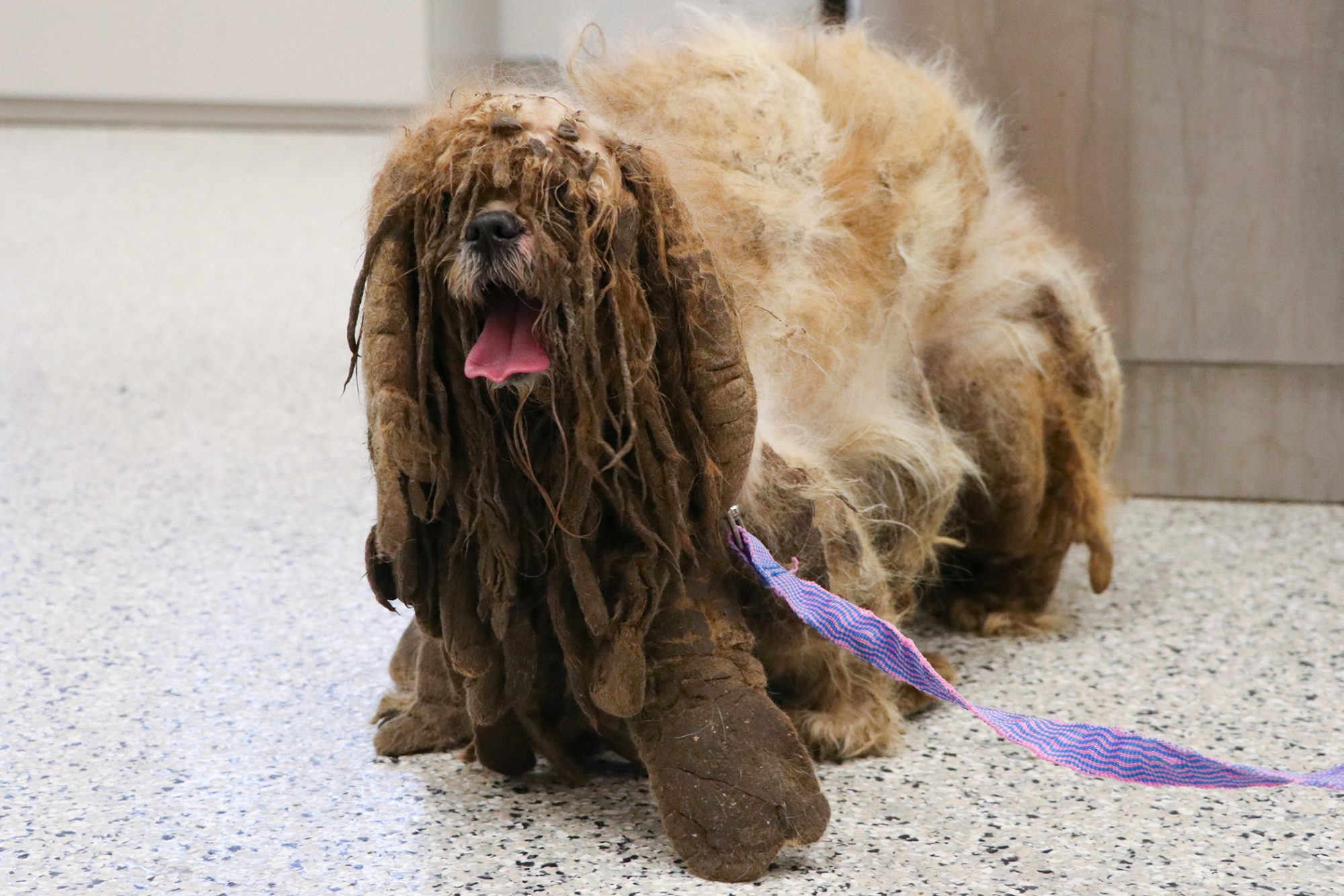 Simon with long, heavy, matted hair