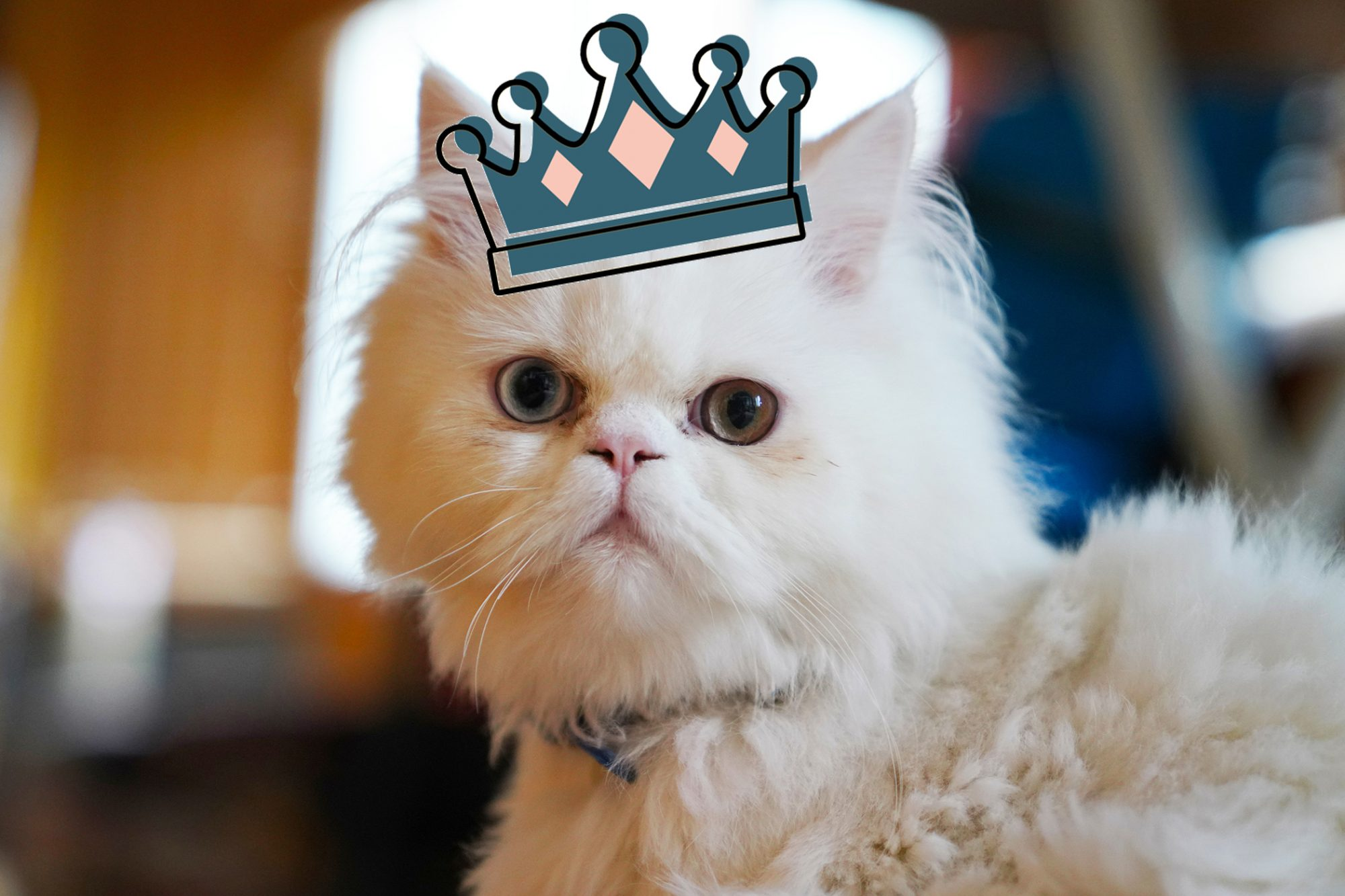 white persian cat with crown illustration
