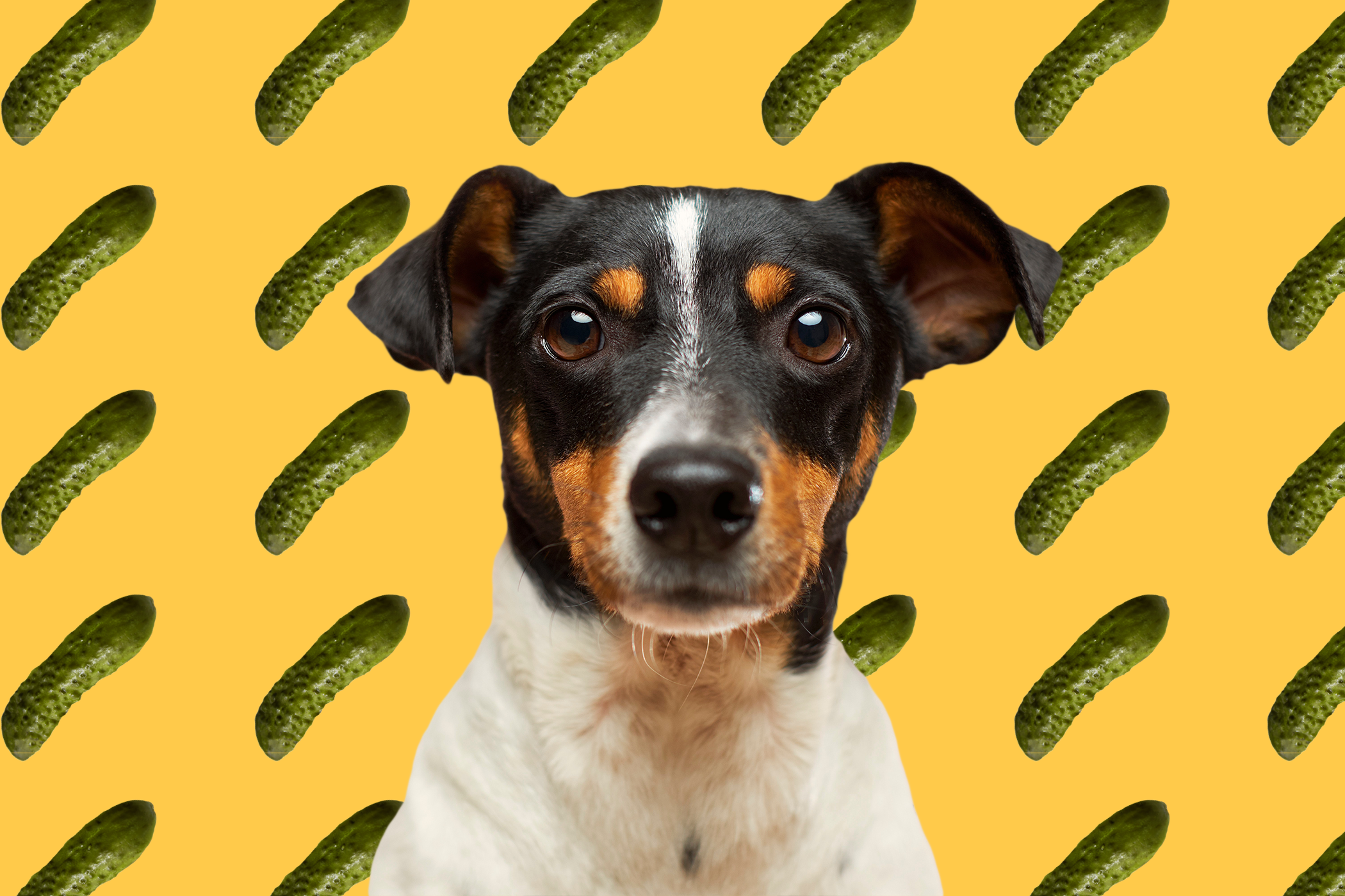 dog pickle graphic