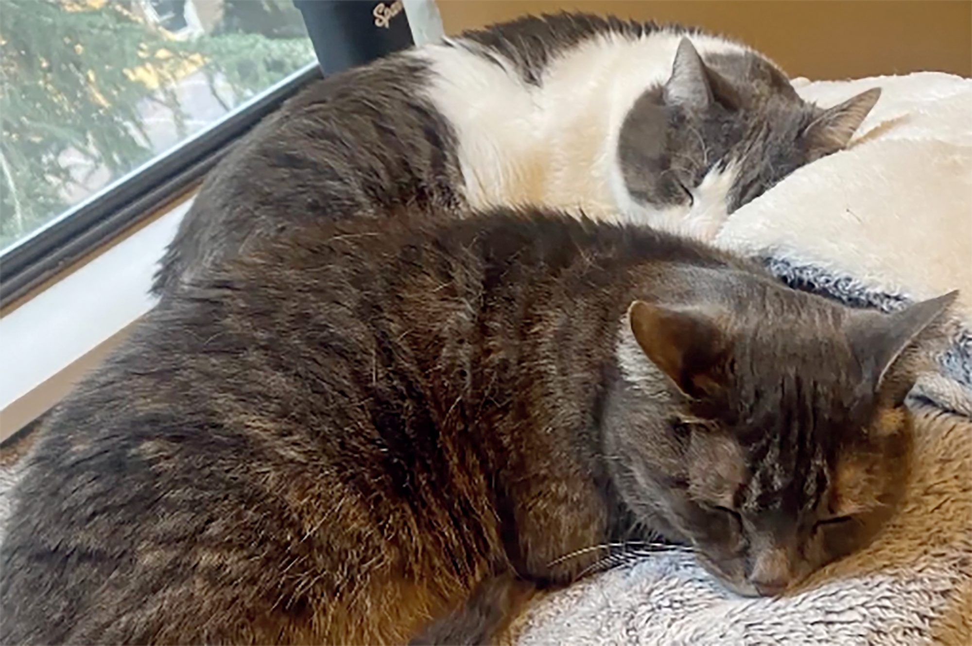 two cats sleeping by window