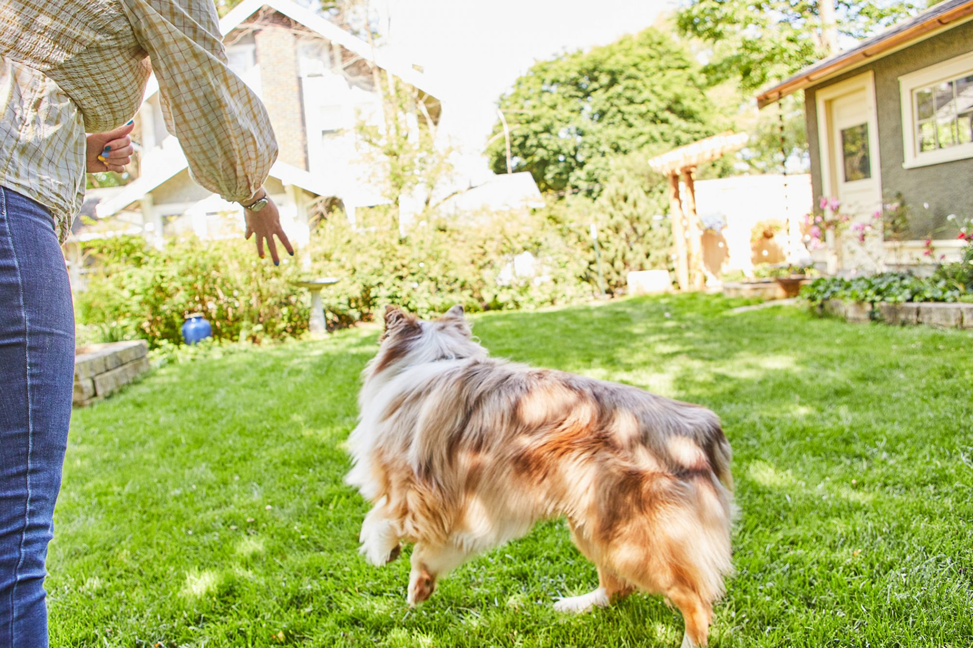 tossing treat for dog to go after