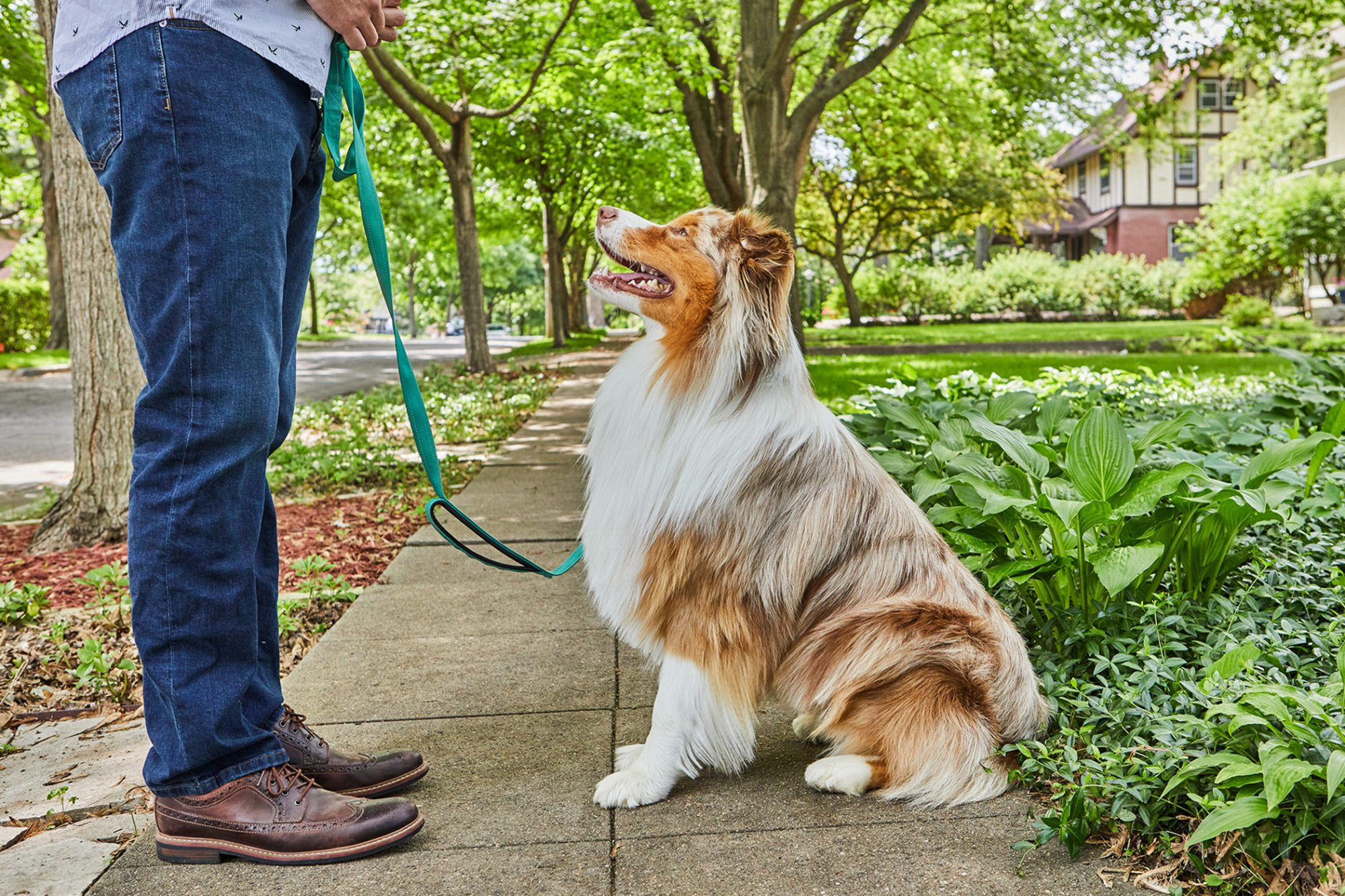 man standing in front of dog