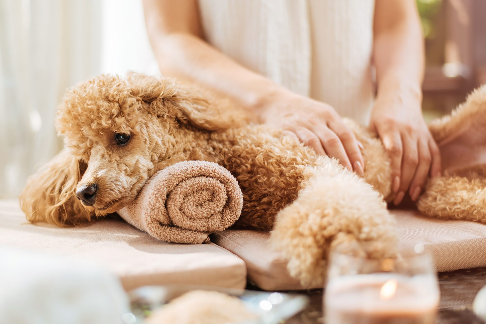 woman giving body massage to a dog