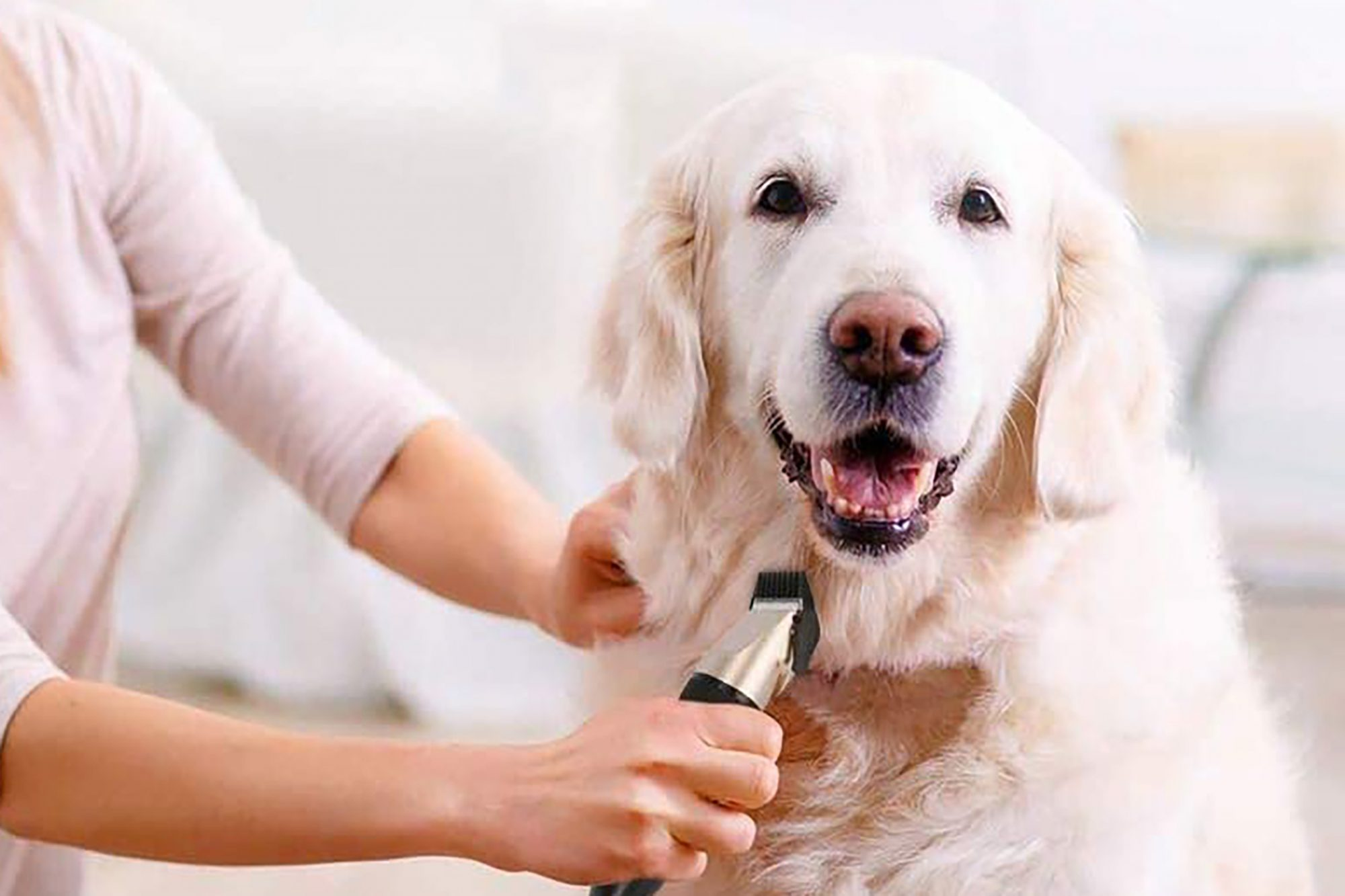 Dog being groomed with clippers
