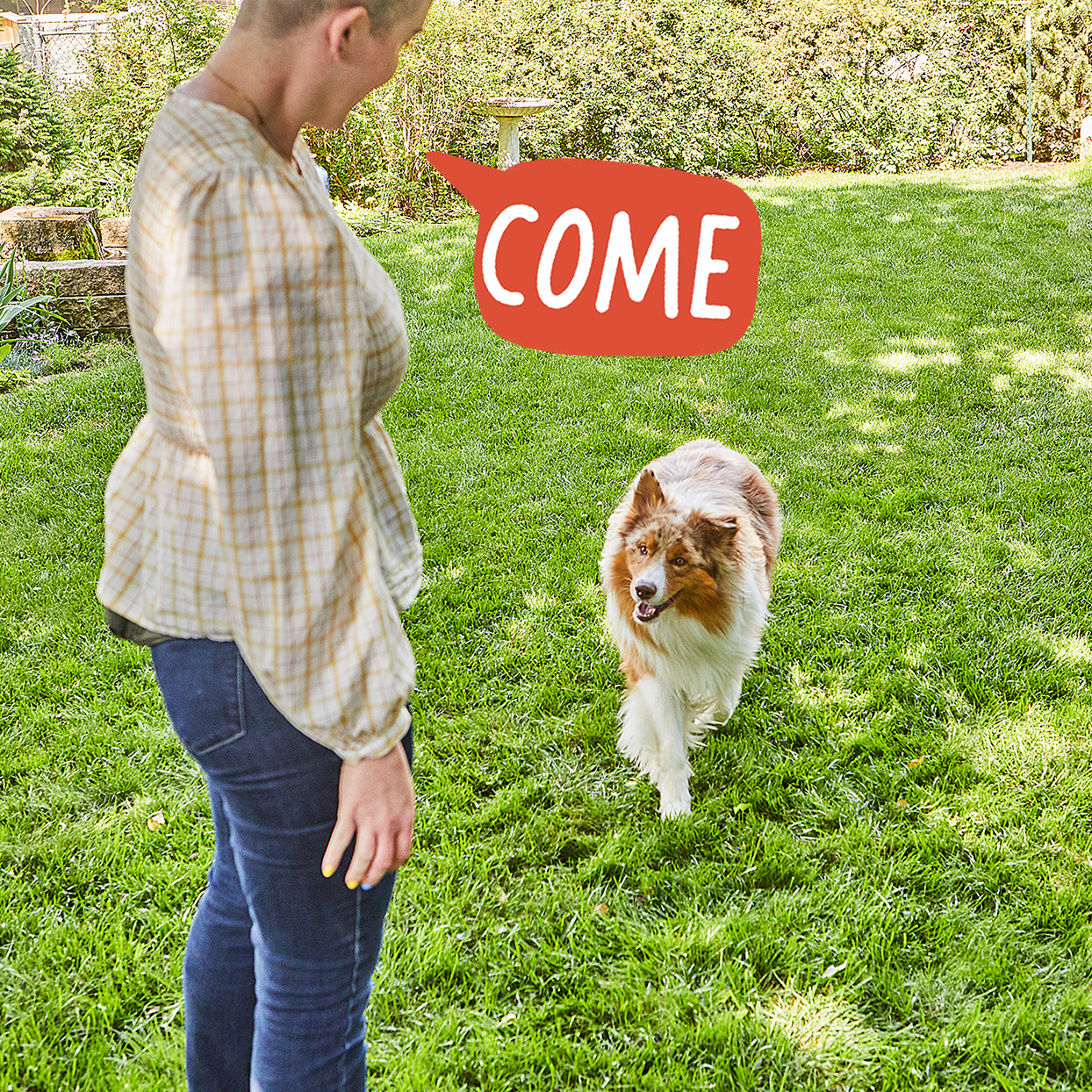 telling your dog to come