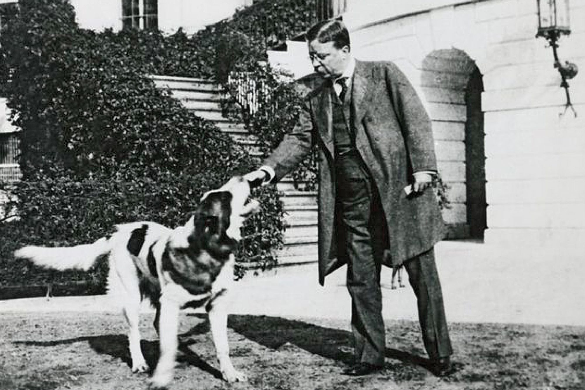 teddy roosevelt and his saint bernard rollo playing outside the white house