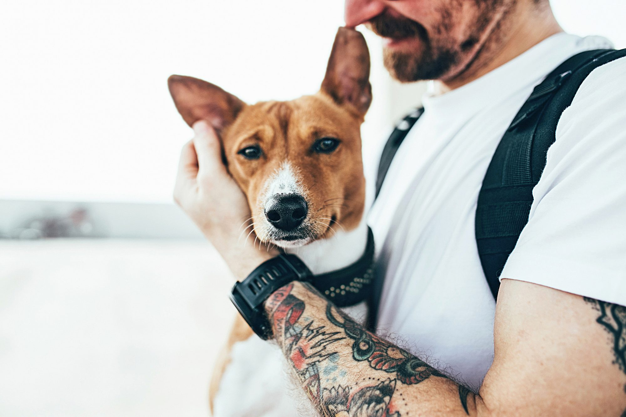 basenji dog held in male owners arms