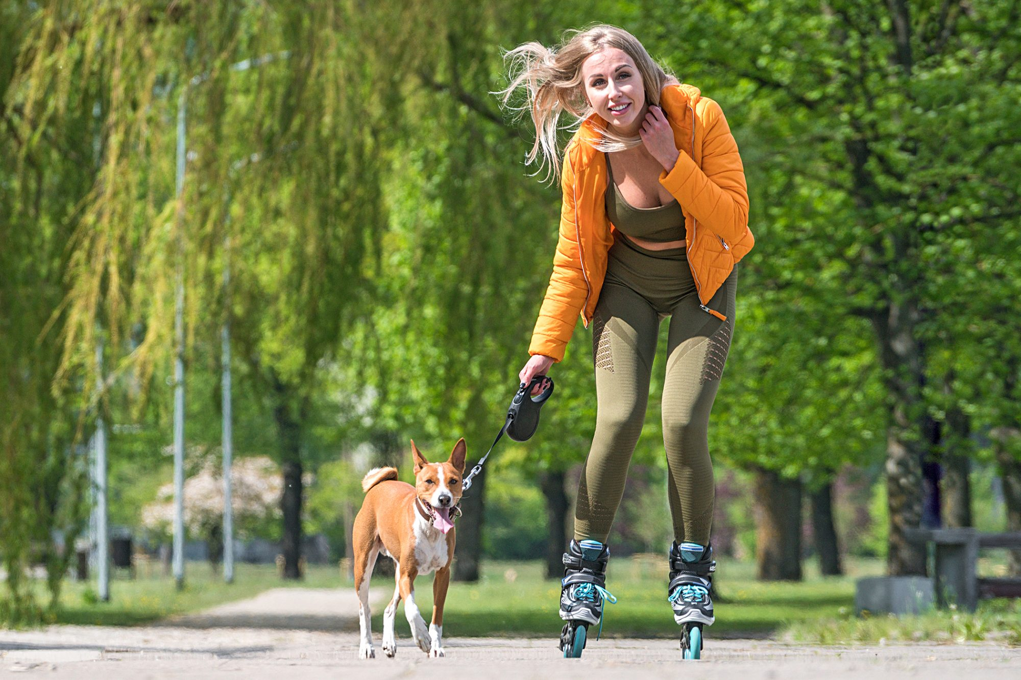 woman roller blading in a park holding basenji dog on a leash