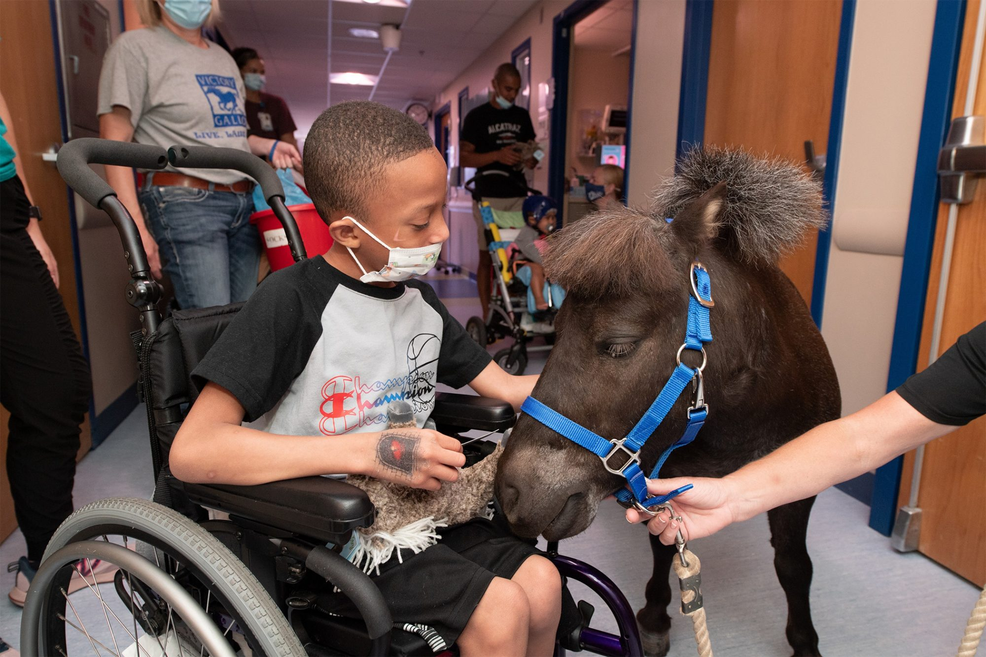 Therapy pony comforting boy in a wheelchair