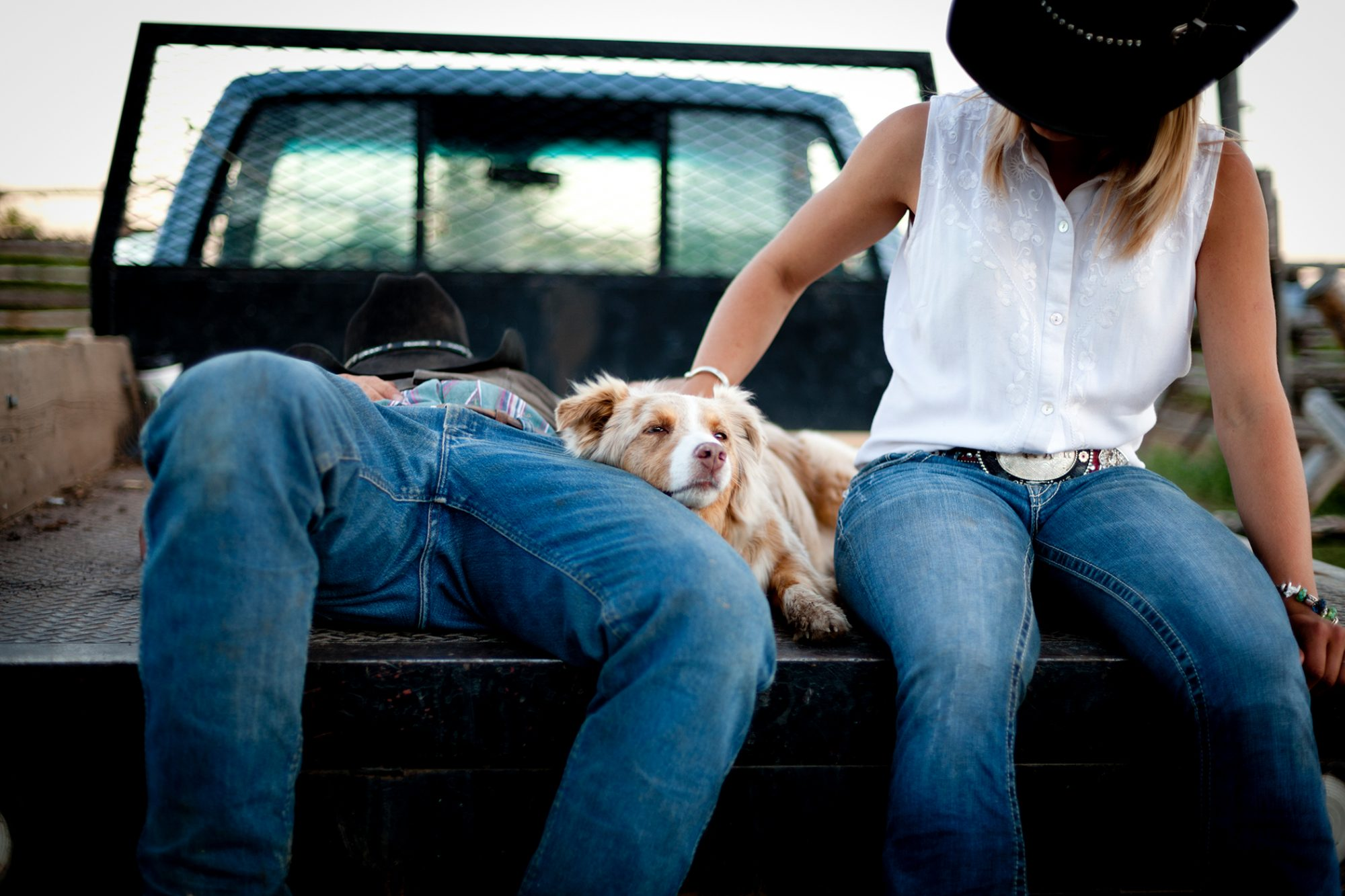 cute country dog sitting in the bed of a pickup truck with owners wearing cowboy hats
