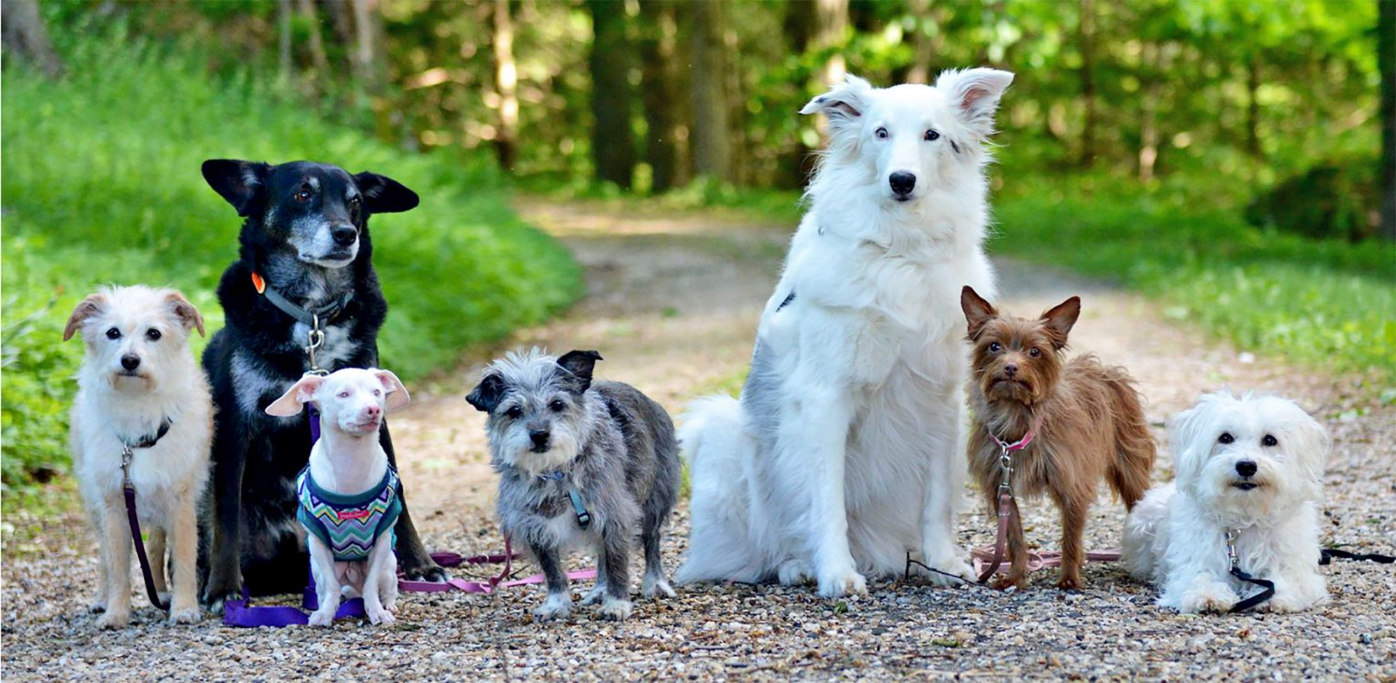 Piglet the Dog with his 6-pack of dog friends