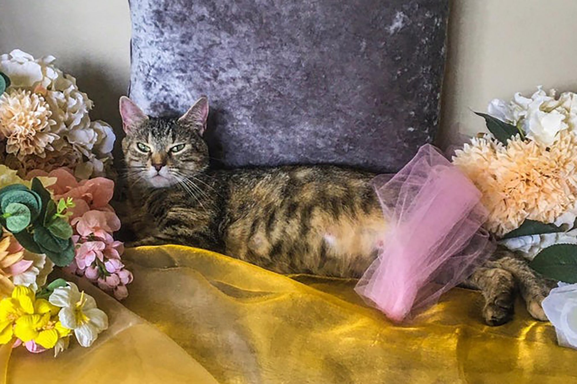 pregnant cat maternity photoshoot inspired by beyonce with yellow fabric and faux flowers
