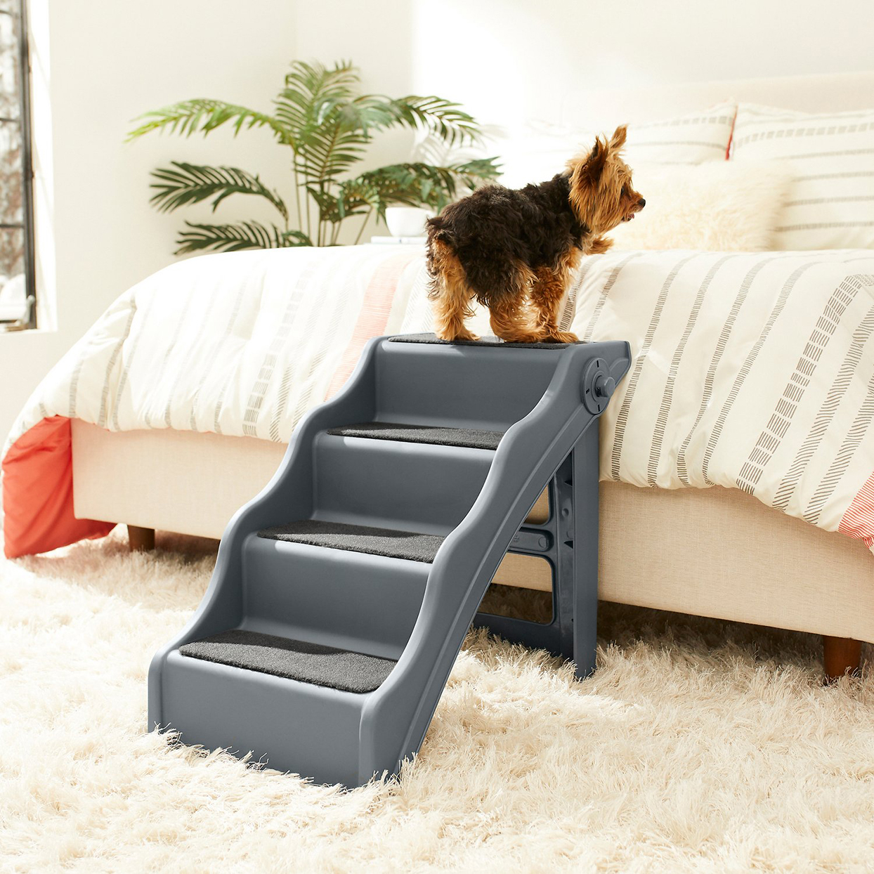 Photo of a dog standing at the top of Frisco Foldable Nonslip Cat Dog Stairs