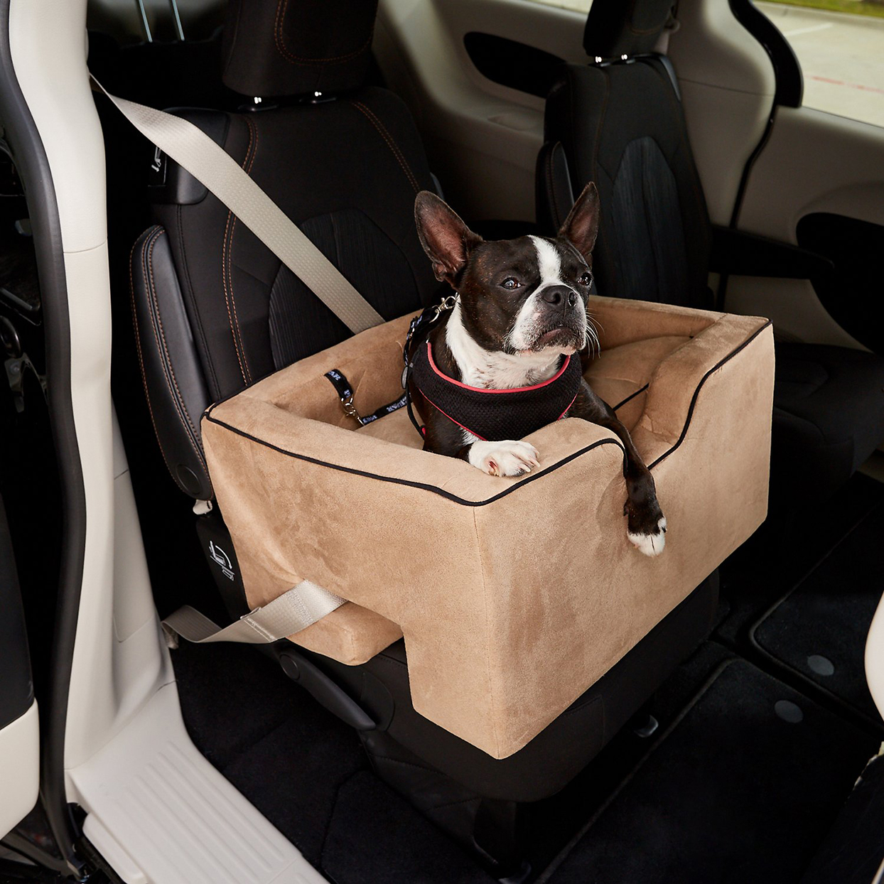 Dog sitting in a Pet Gear Large Car Booster seat