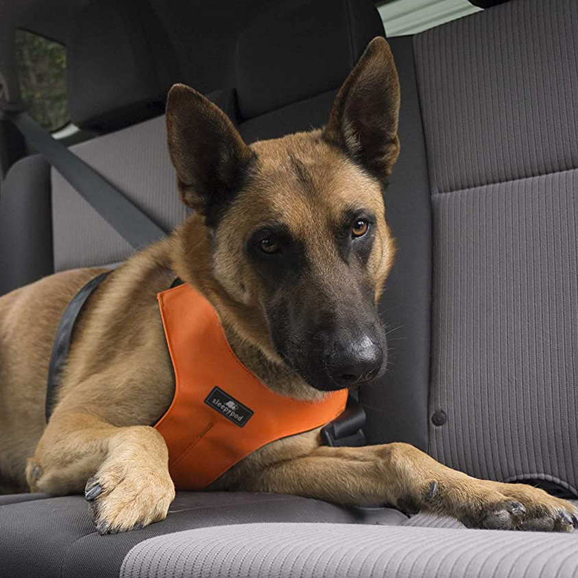 Photo of a dog in a car wearing a Sleepypod ClickIt Sport Crash-Tested Car Safety Dog Harness