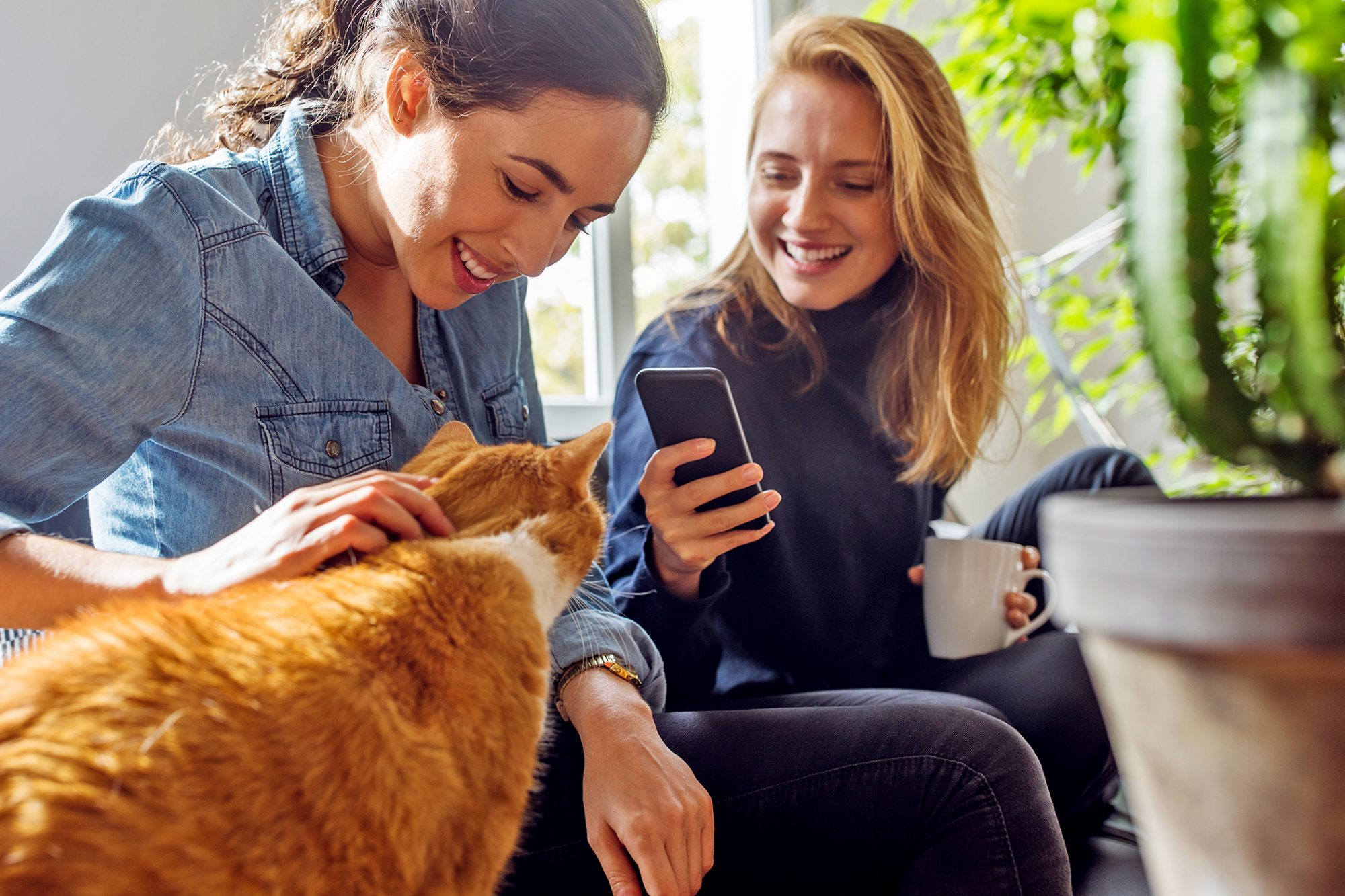 taking picture of cat with iphone to use app to see whether cat is happy