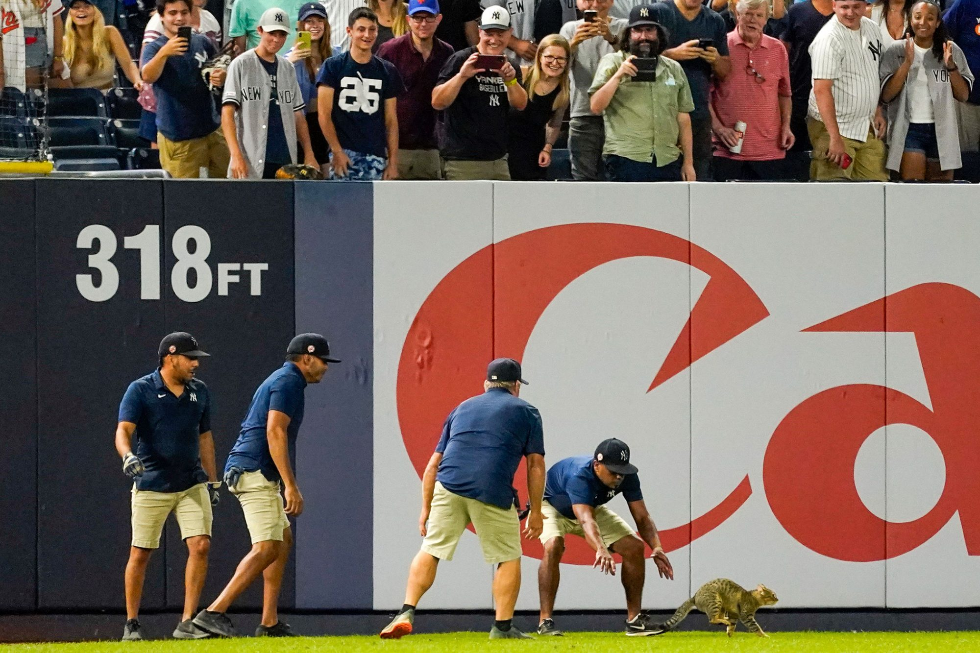 Yankee Stadium grounds crew members try to catch a cat that entered the field in the eighth inning of a baseball game between the New York Yankees and the Baltimore Orioles, in New York