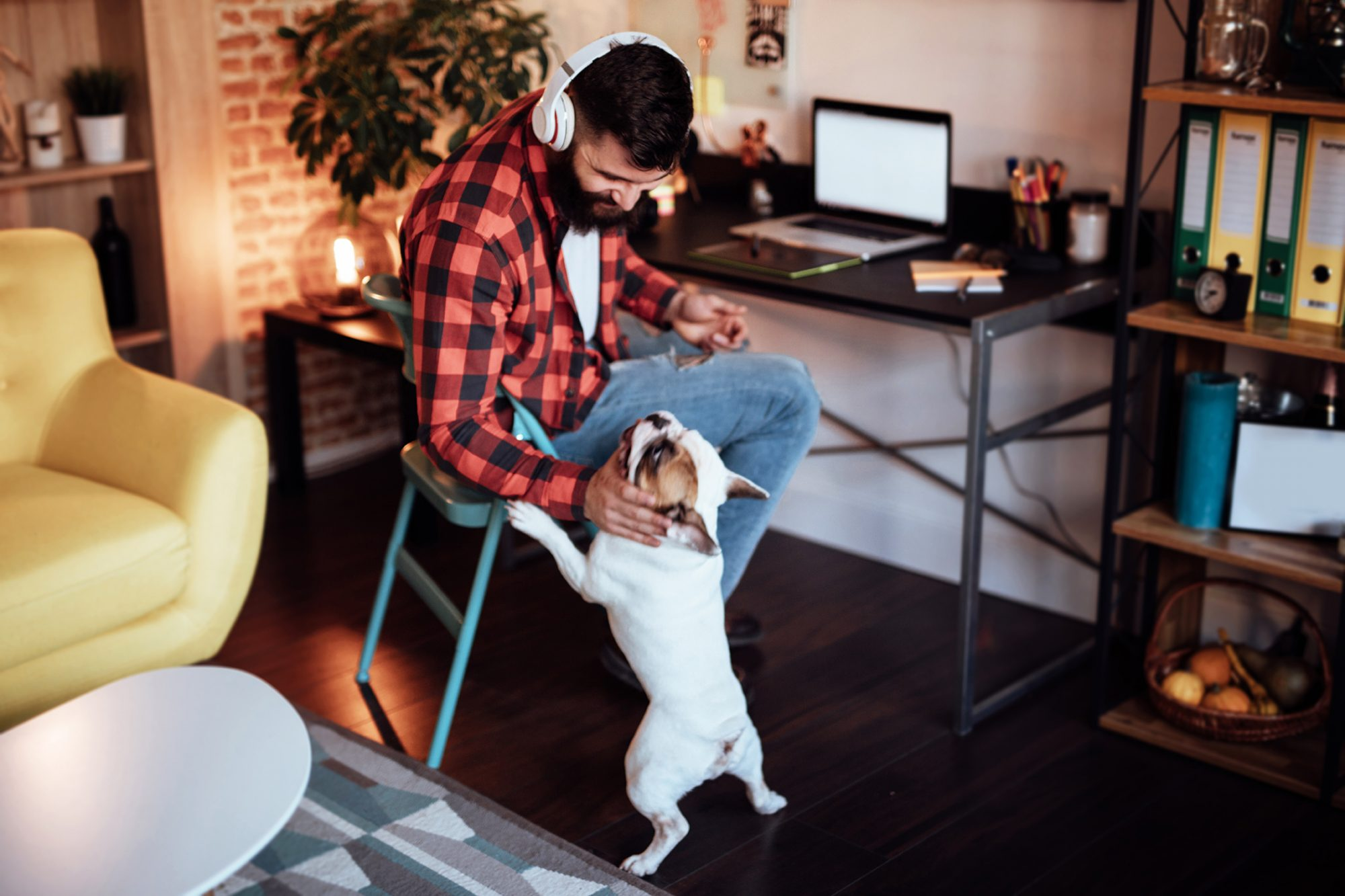 distract your dog while you are working from home