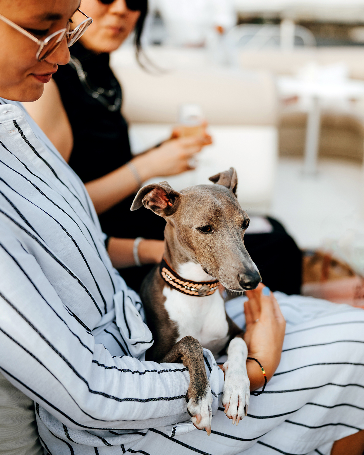 Young Italian Greyhound resting on young girl's lap on boat