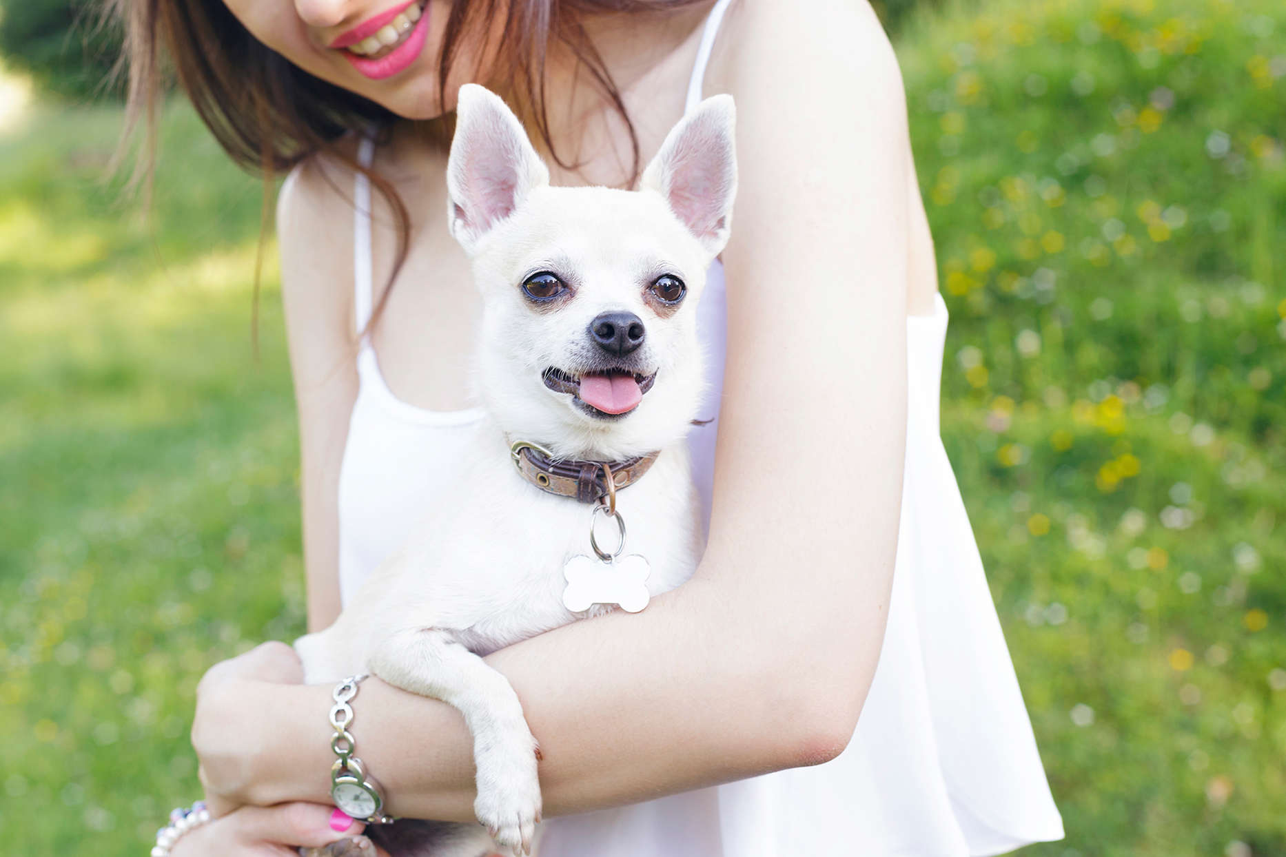 Latin girl with her lovely dog, a white chihuahua, outdoors, in a park, on a green meadow.