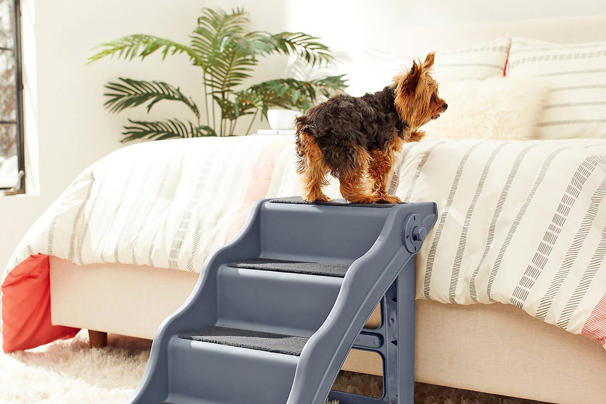 dog walking up dog stairs to get on top of bed