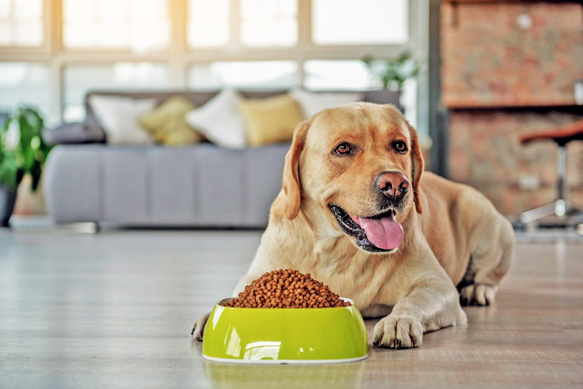 lab in front of dog bowl