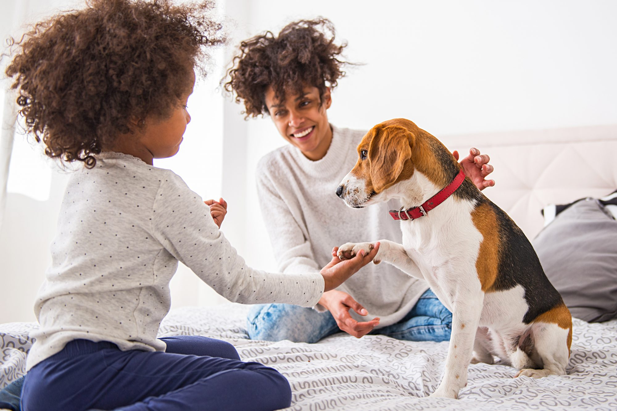 mother and young child sitting in bed teaching their american foxhound to shake