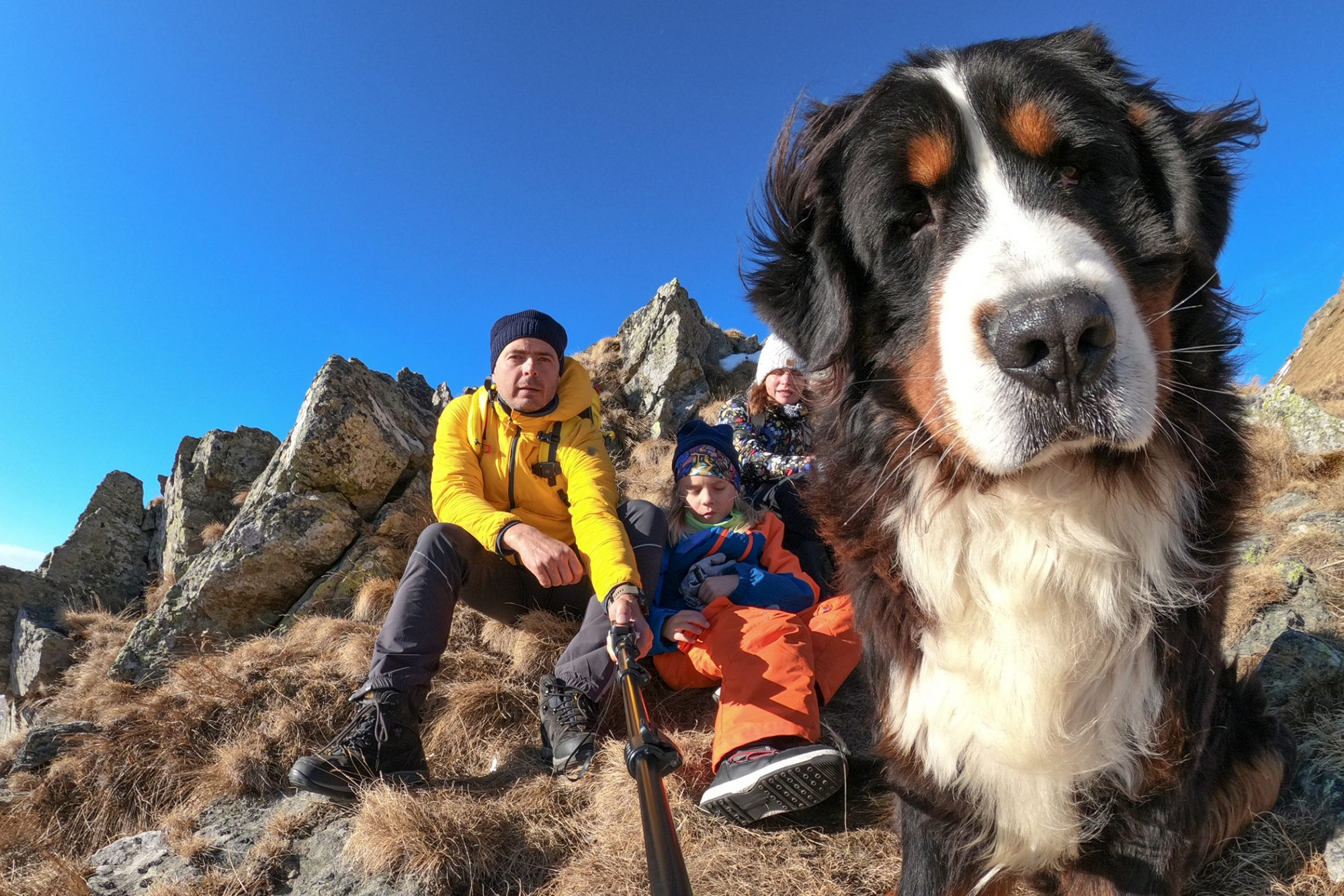 bernese mountain dog hiking on a mountain with his family