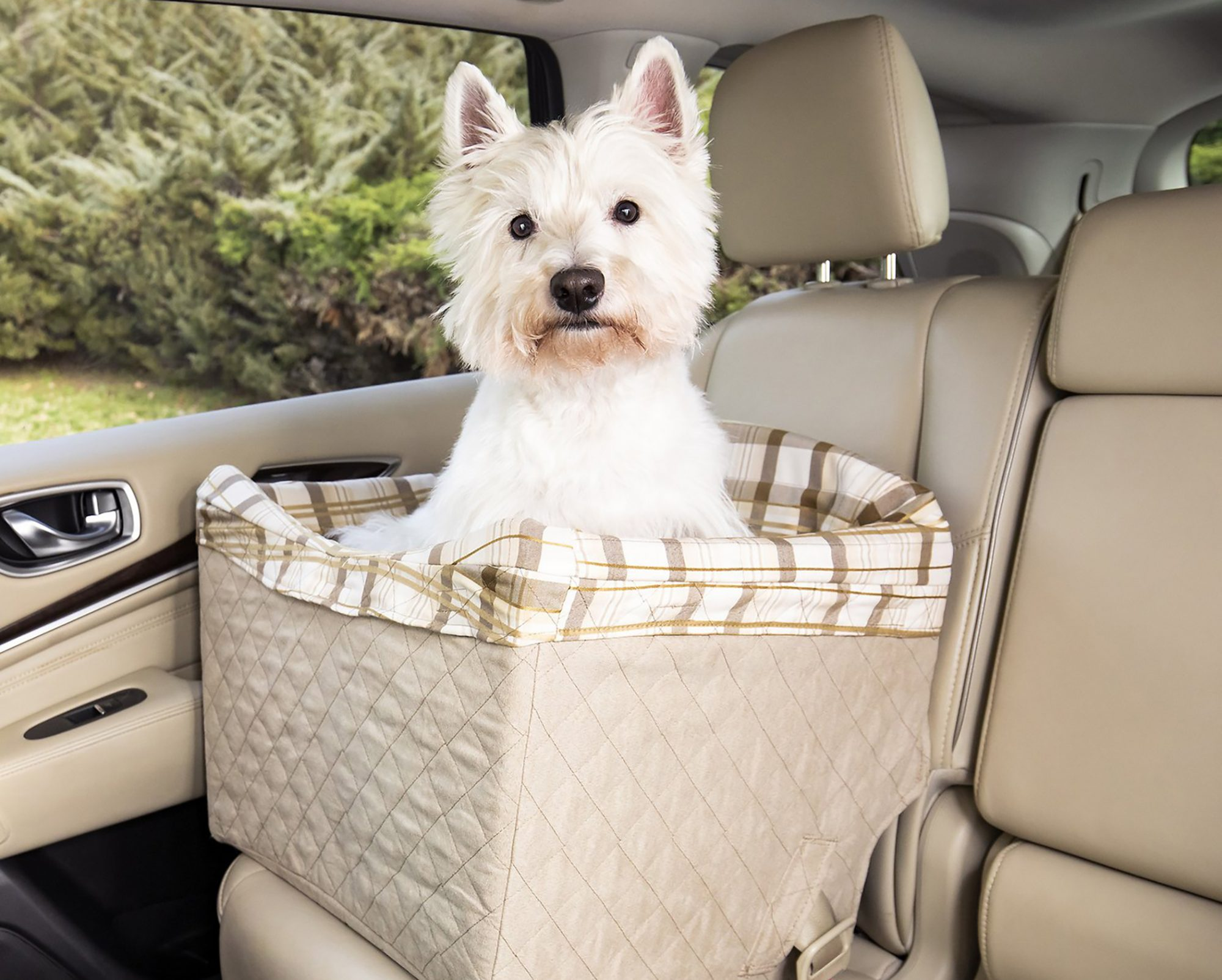 dog sitting in a quilted booster seat