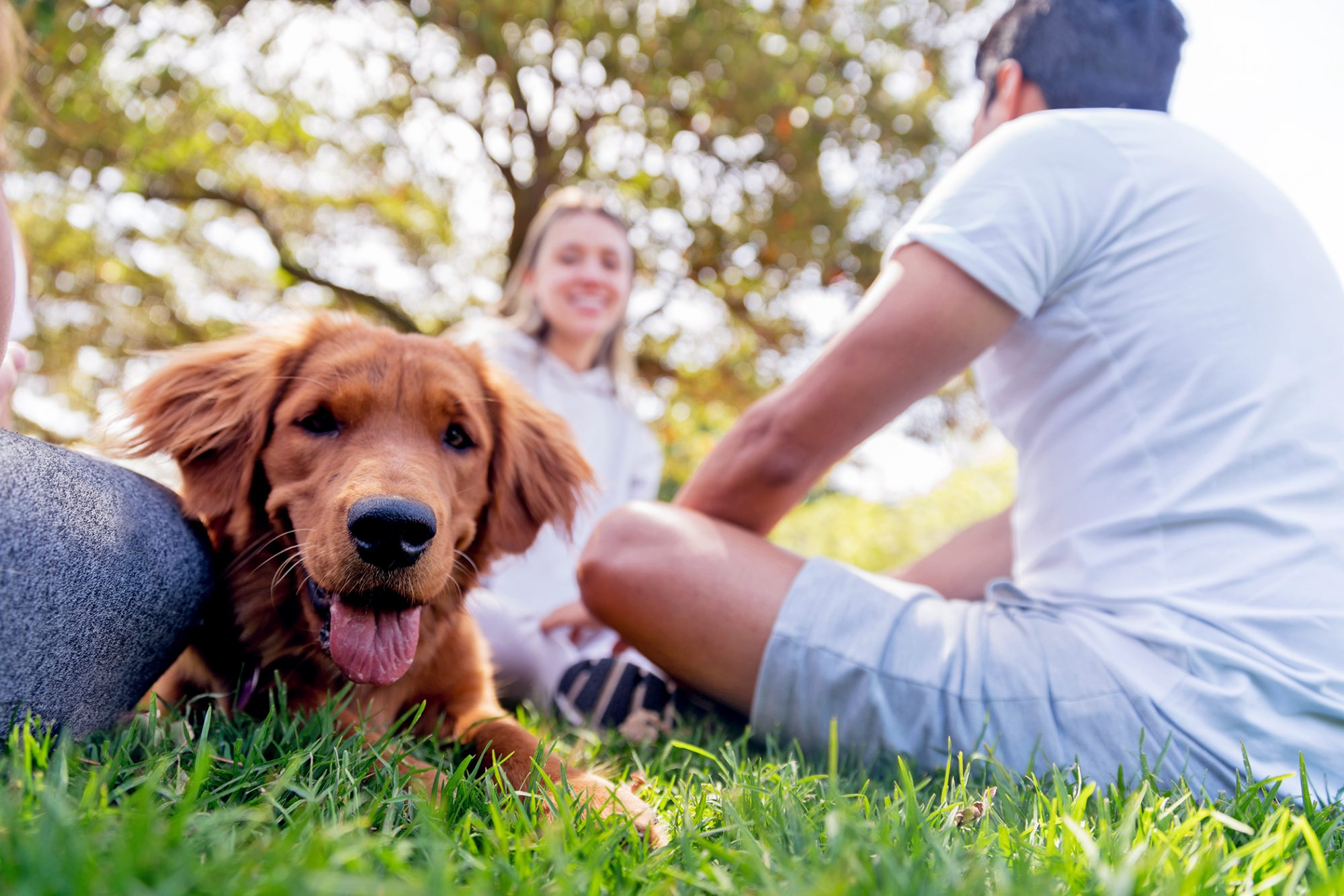 red dog sitting in grass with owners at the park