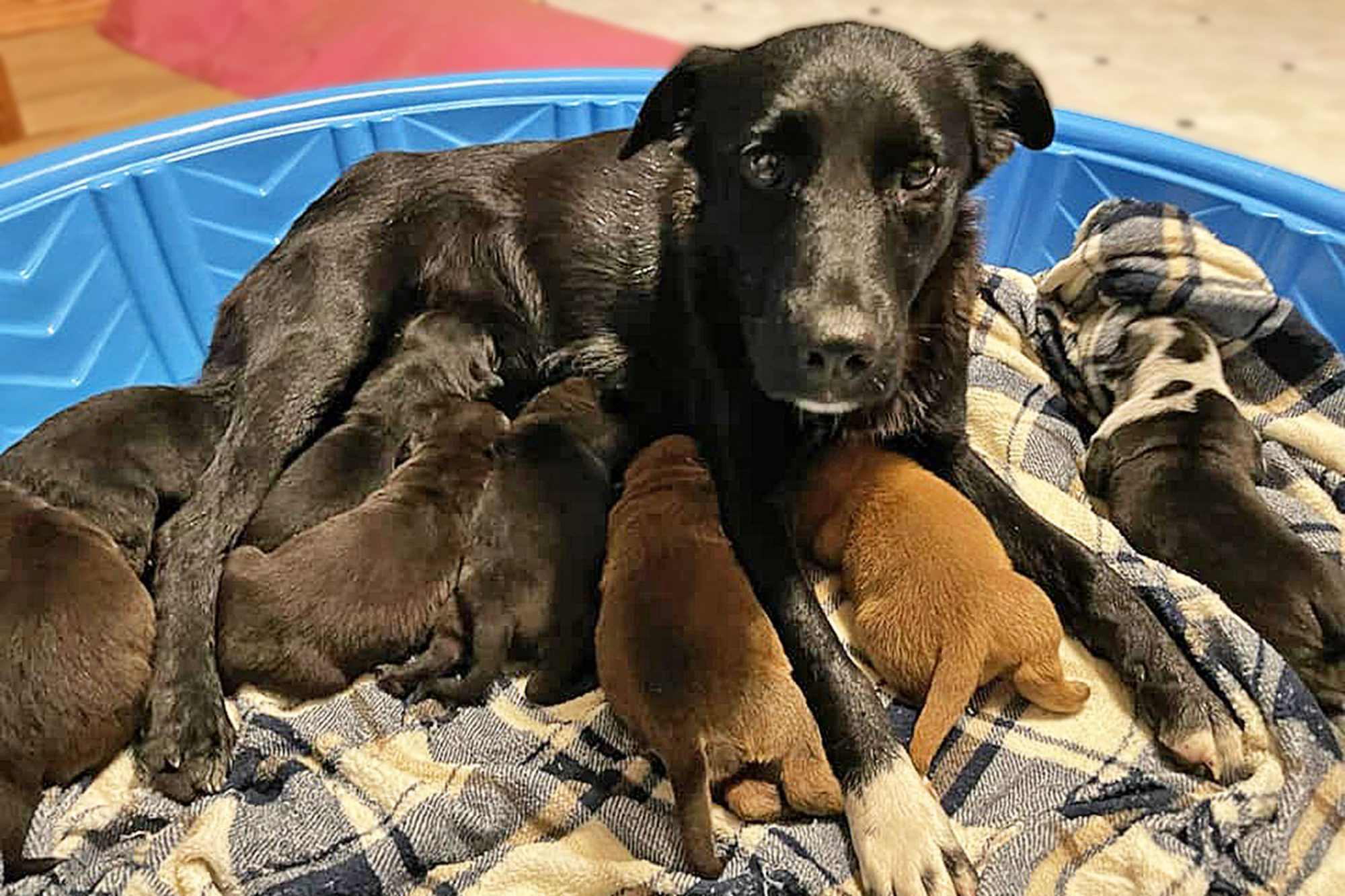 puppies who lost mom adopted by mom who lost puppies