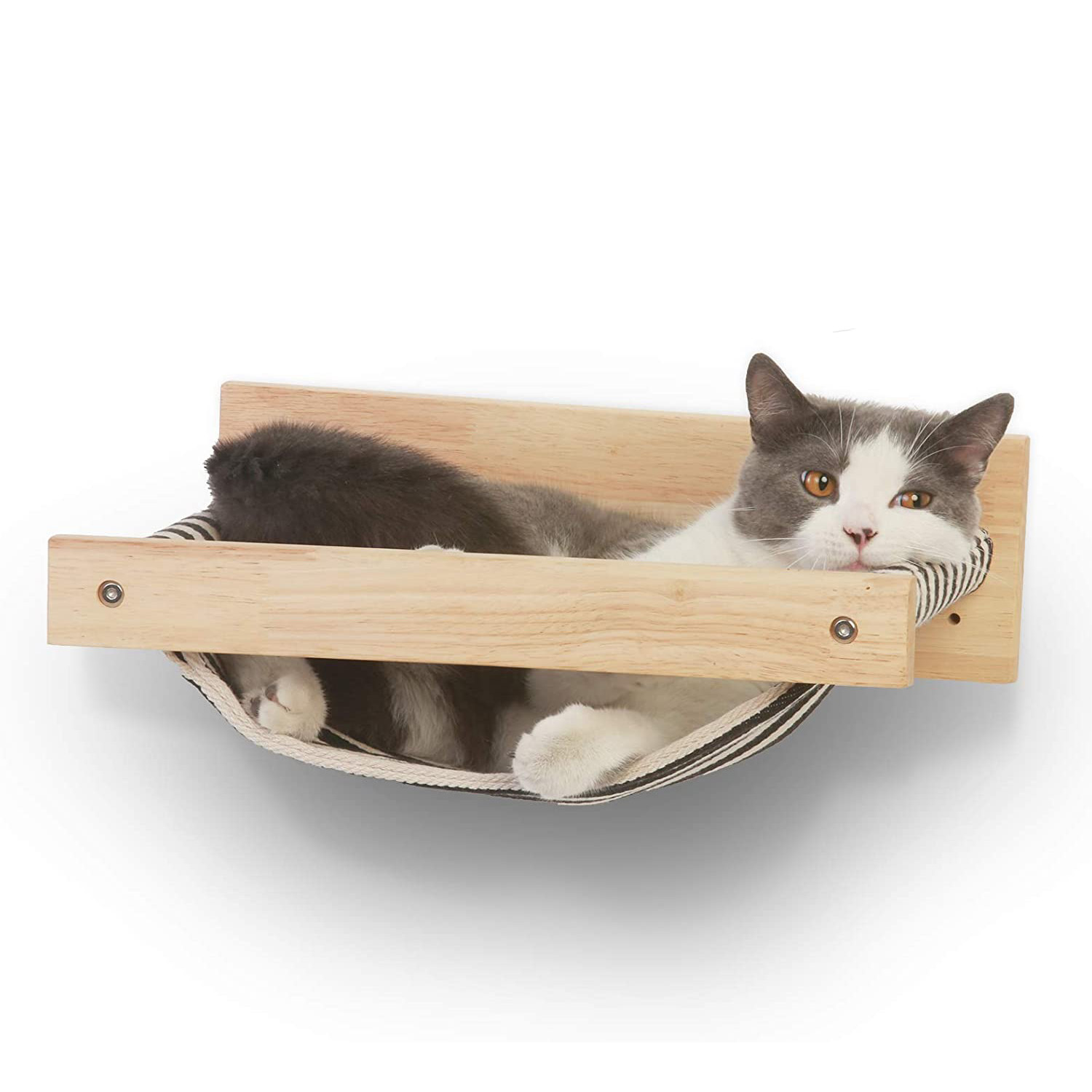 Cat lying in a Fukumaru Cat Hammock attached to a white wall
