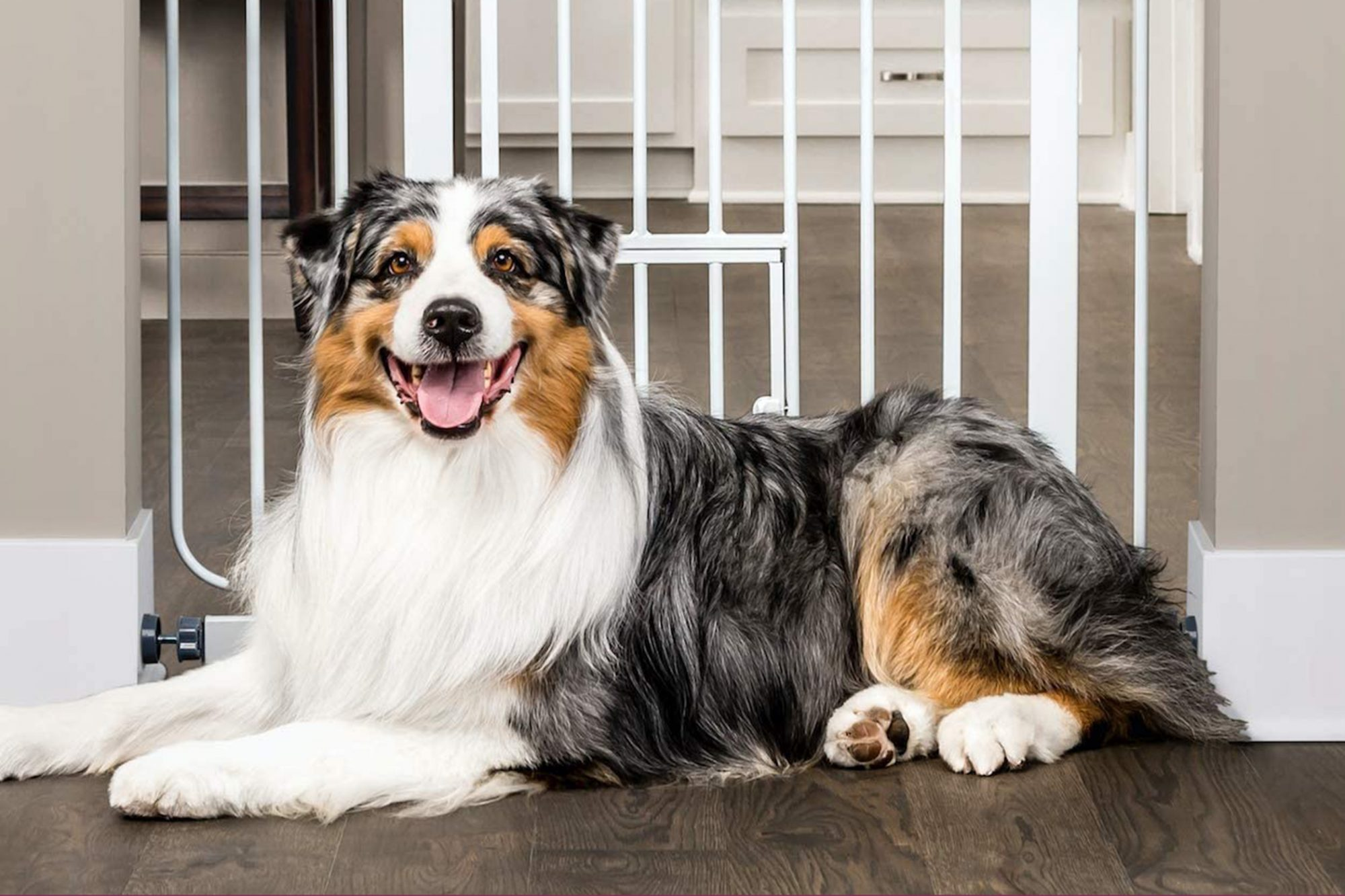 dog laying in front of a dog gate