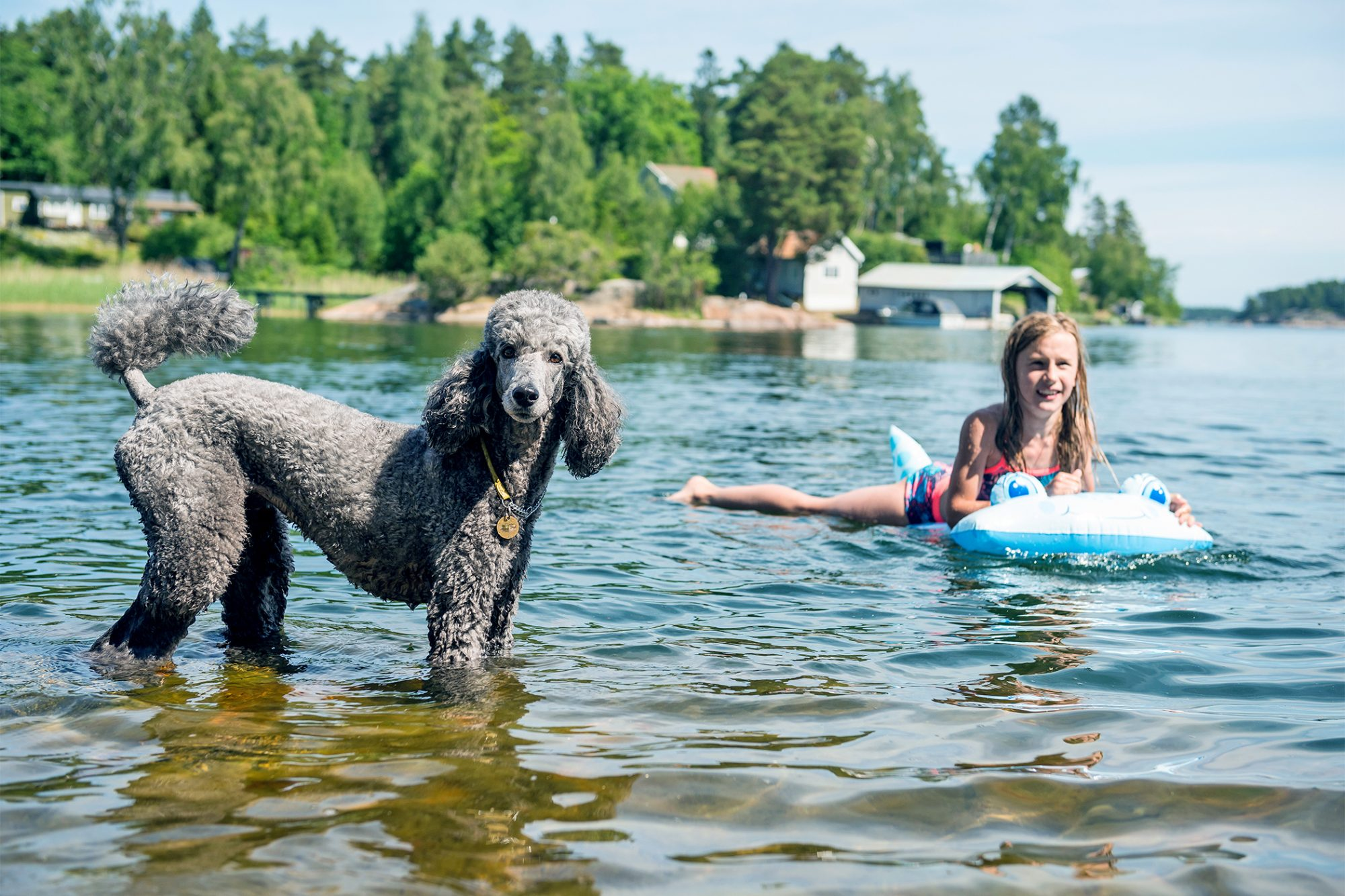 grey poodle and a smiling young girl in a lake