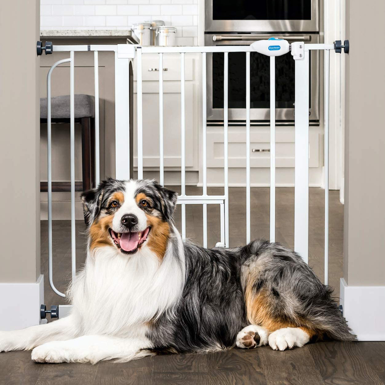 Dog lying in front of a Carlson Extra Wide Walk Through Pet Gate with Small Pet Door
