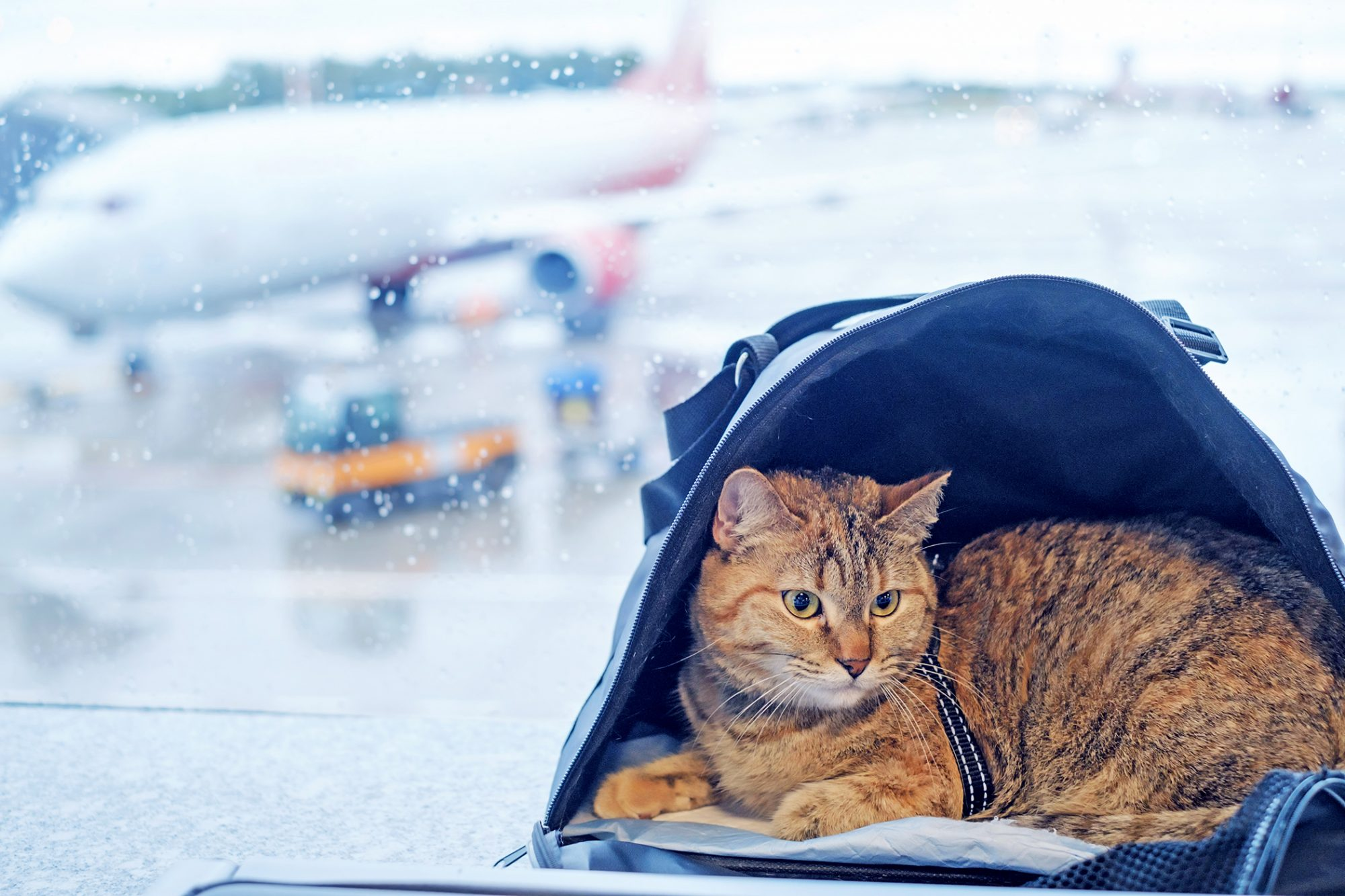 flying with a cat in a cat carrier next to a window at the airport