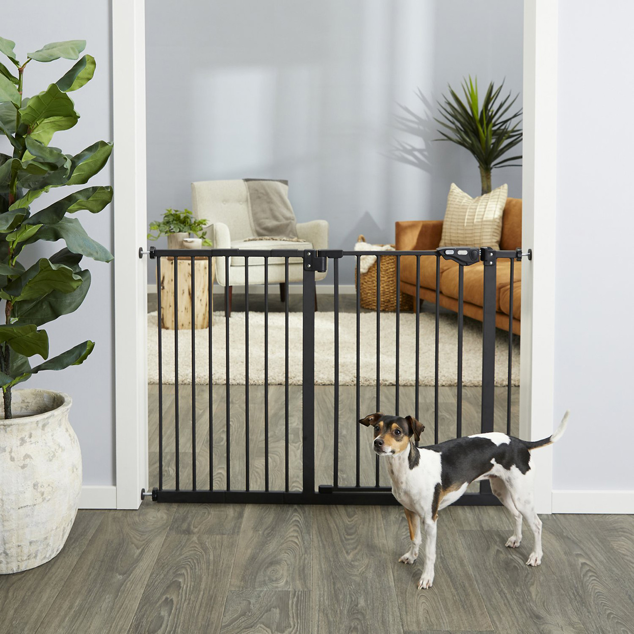 Dog standing in from of a Frisco Extra Wide Auto-Close Pet Gate