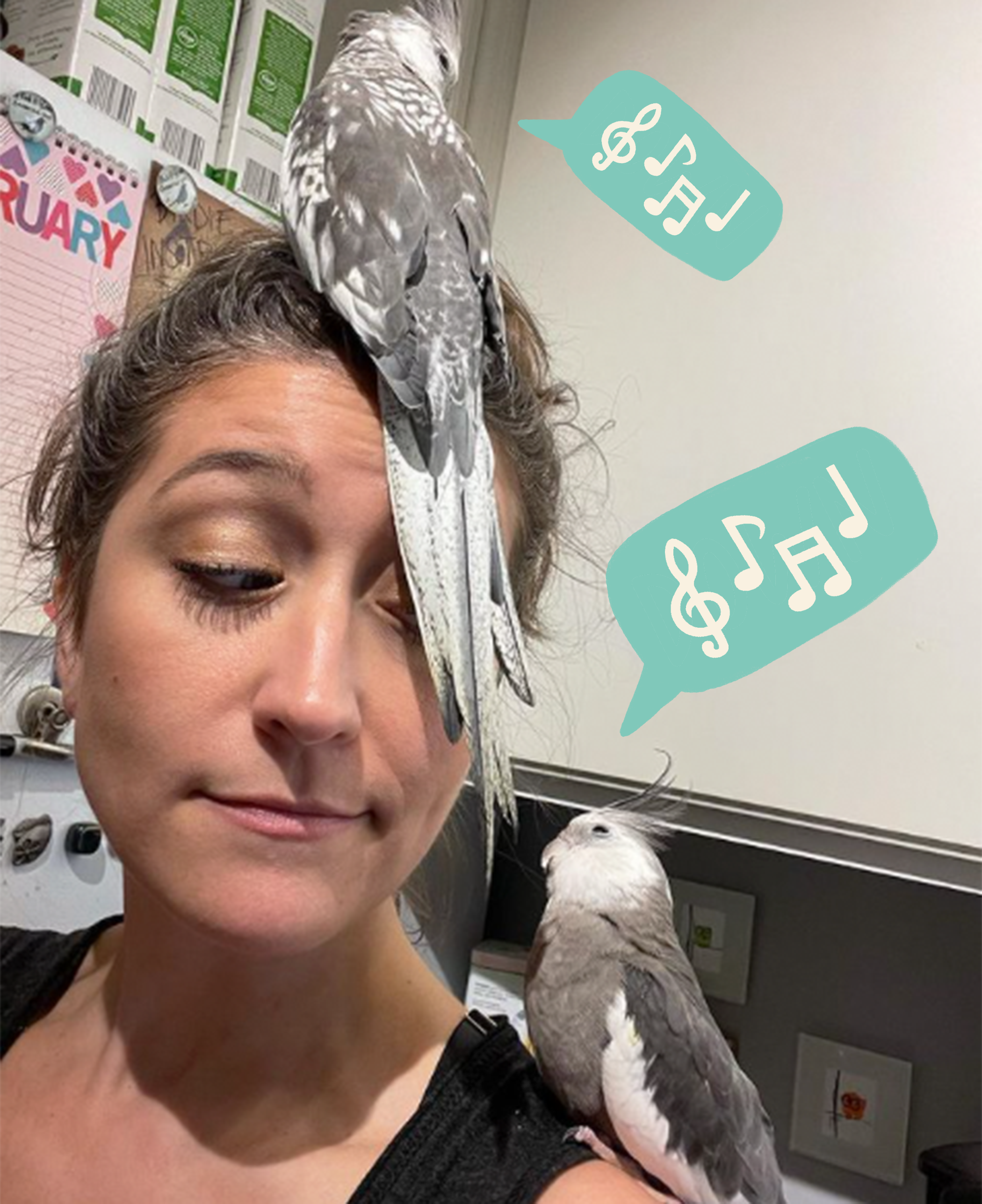 bird sings and sparks a viral storm of duets