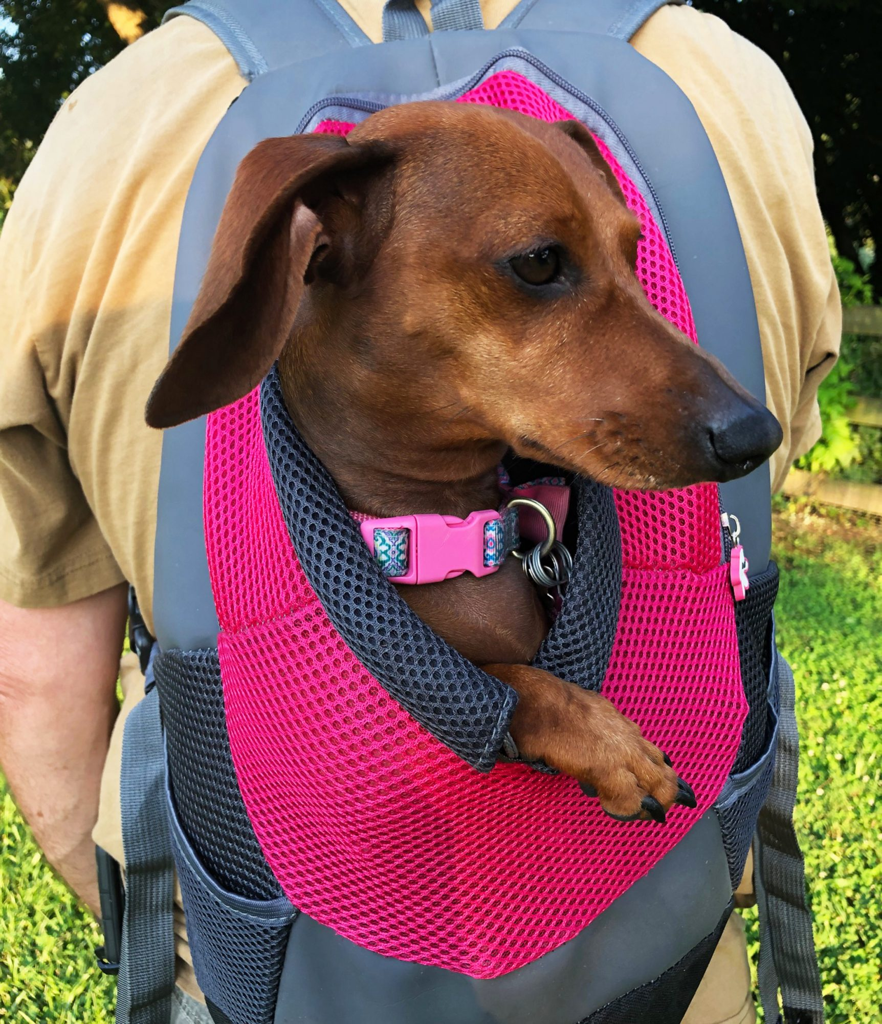 Freya, the rescue dog, nestled in pink and grey backpack