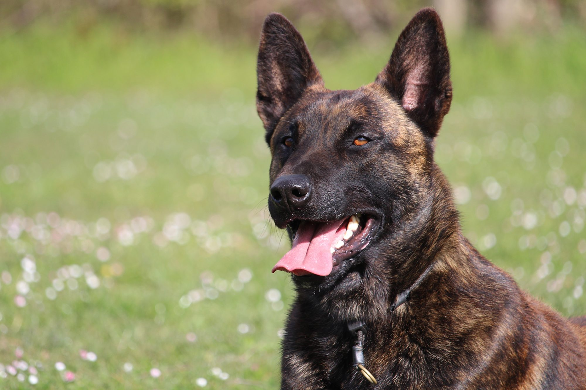 k9 finds missing child in 5 minutes