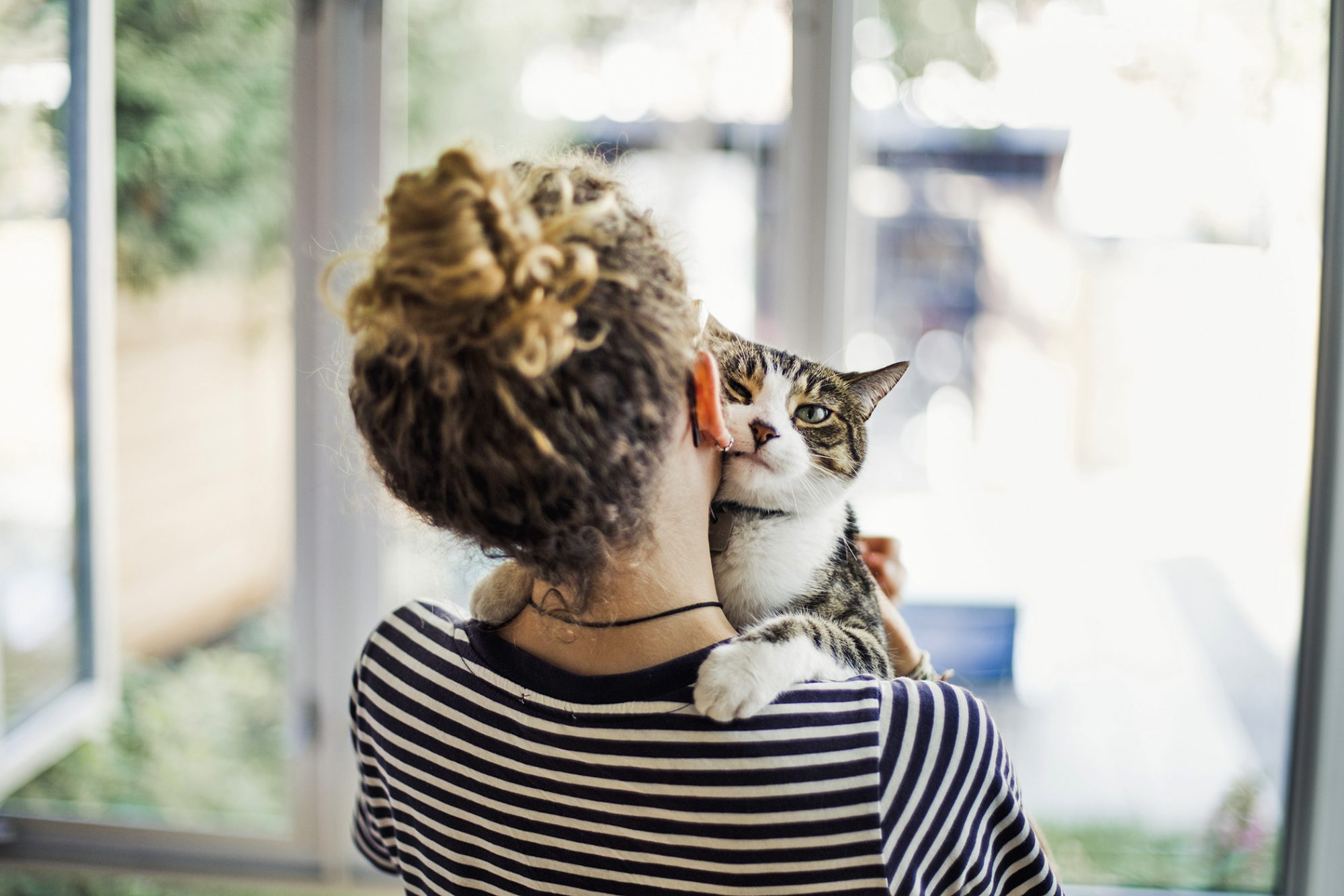 girl holding cat at window - good cat cities and bad cat cities