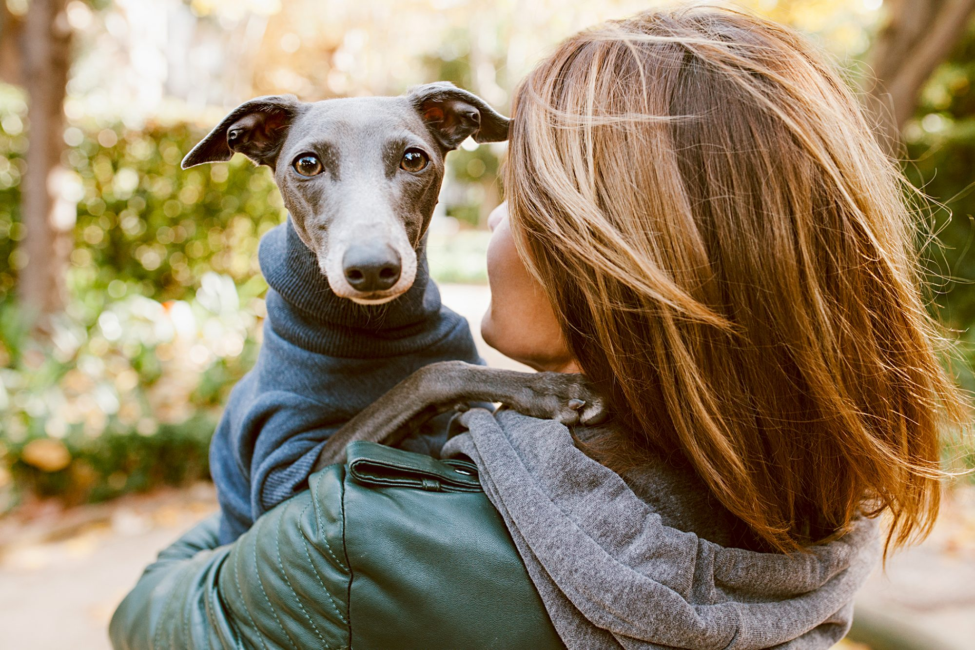 italian greyhound wearing a turtleneck sweater held in a woman's arms outside on a walk