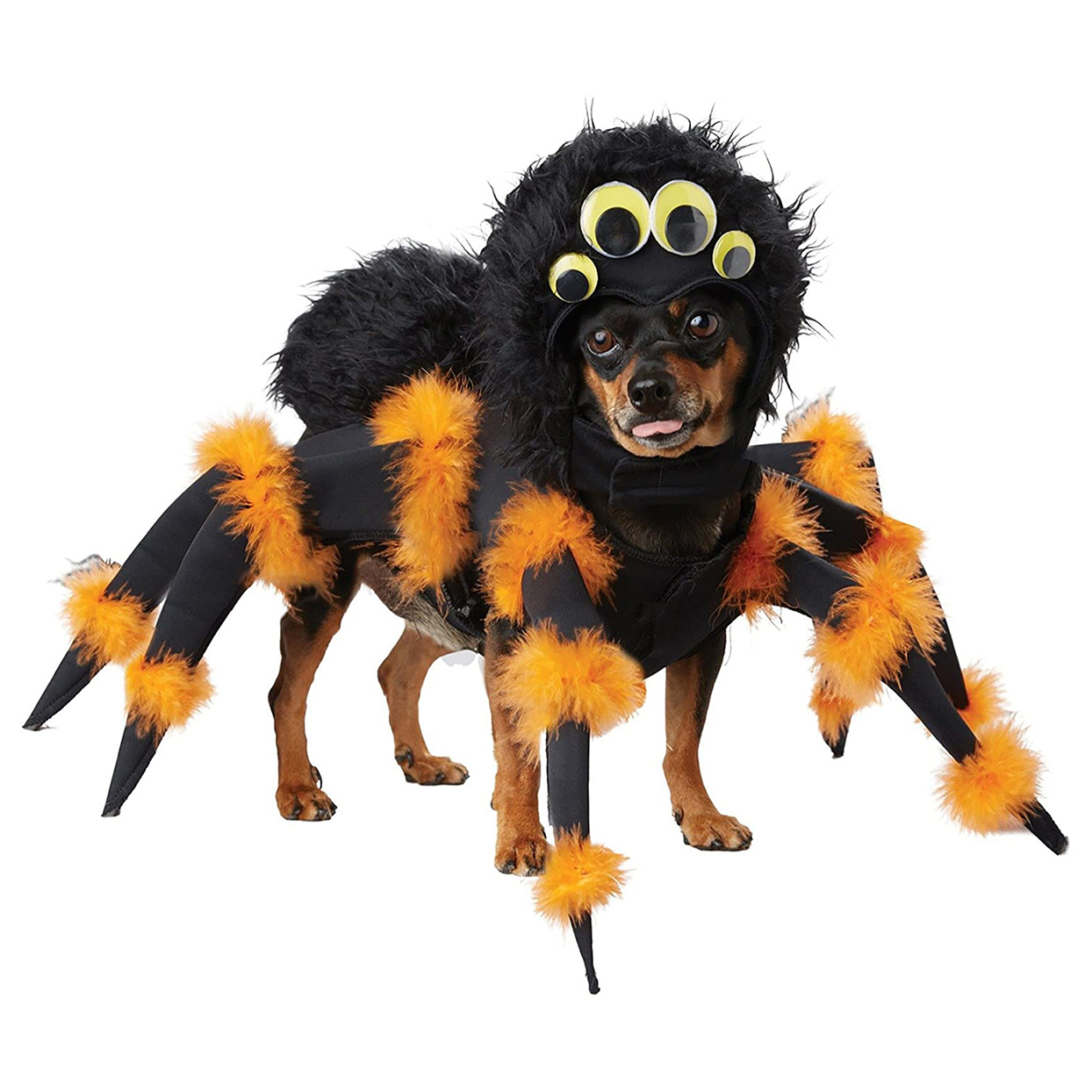 Dog wearing the California Costumes Pet Spider Dog Costume on a white background
