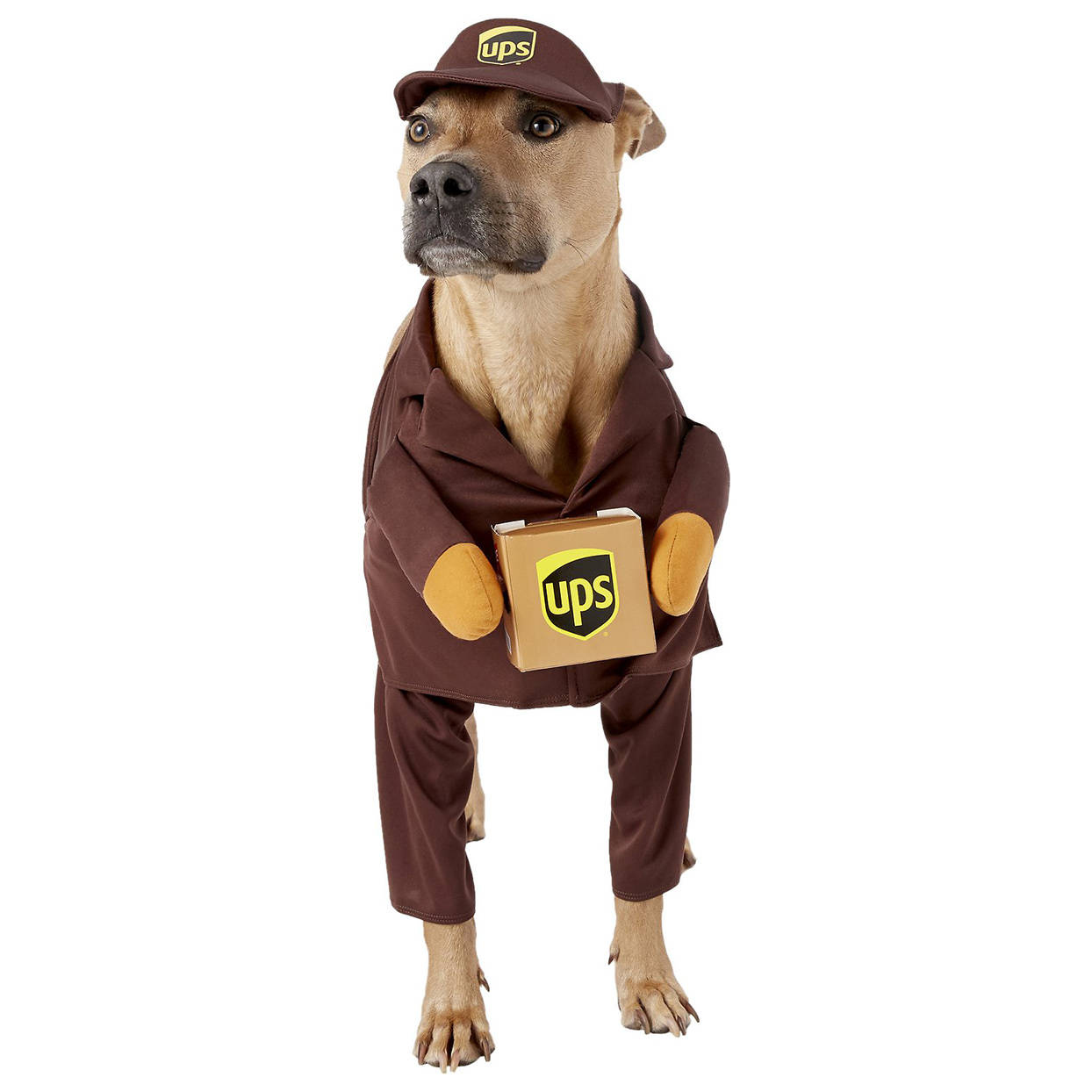 Dog wearing the California Costumes UPS Delivery Driver Dog & Cat Costume on a white background