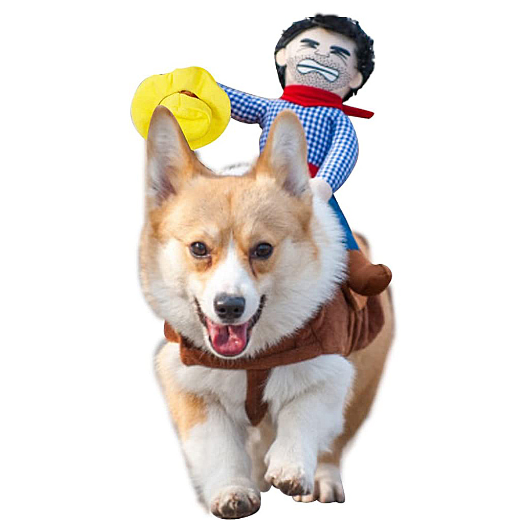 Dog wearing the Cowboy Rider Dog Costume on a white background