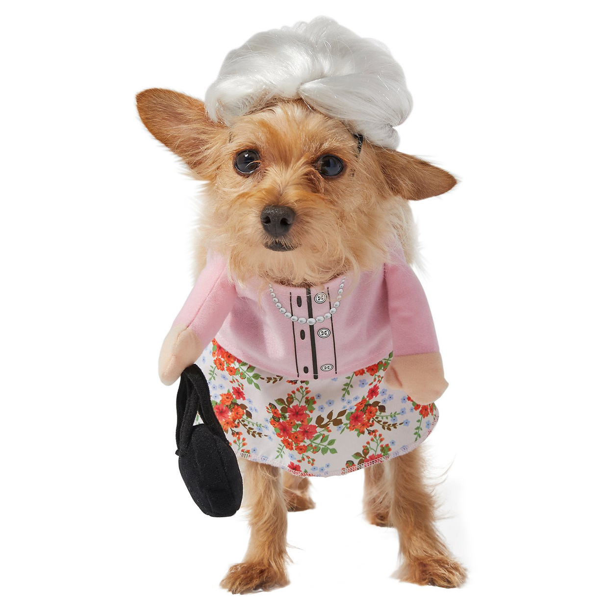 Dog wearing the FRISCO Front Walking Granny Dog & Cat Costume on a white background
